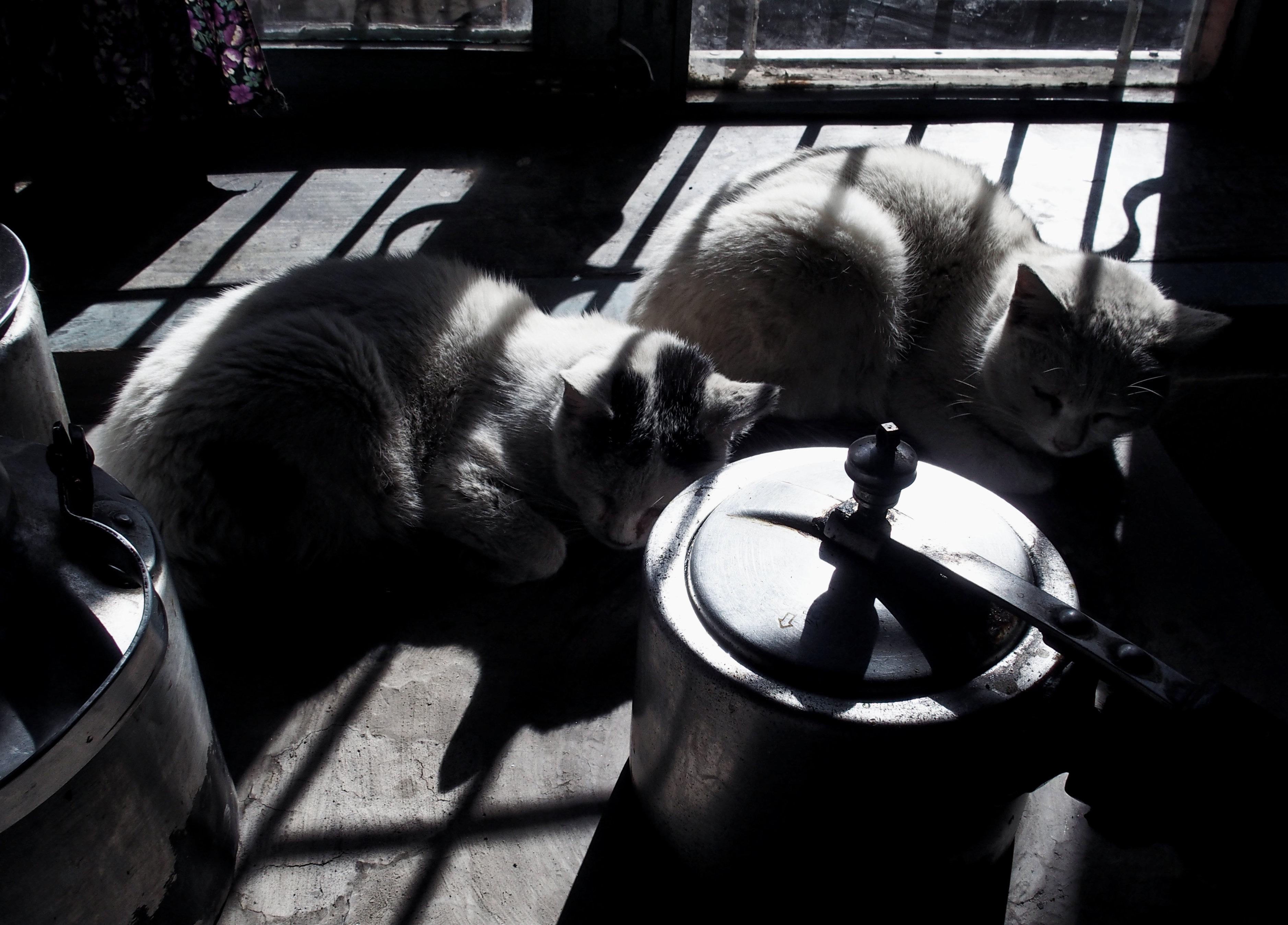 Katzen in der Sonne in Kagbeni