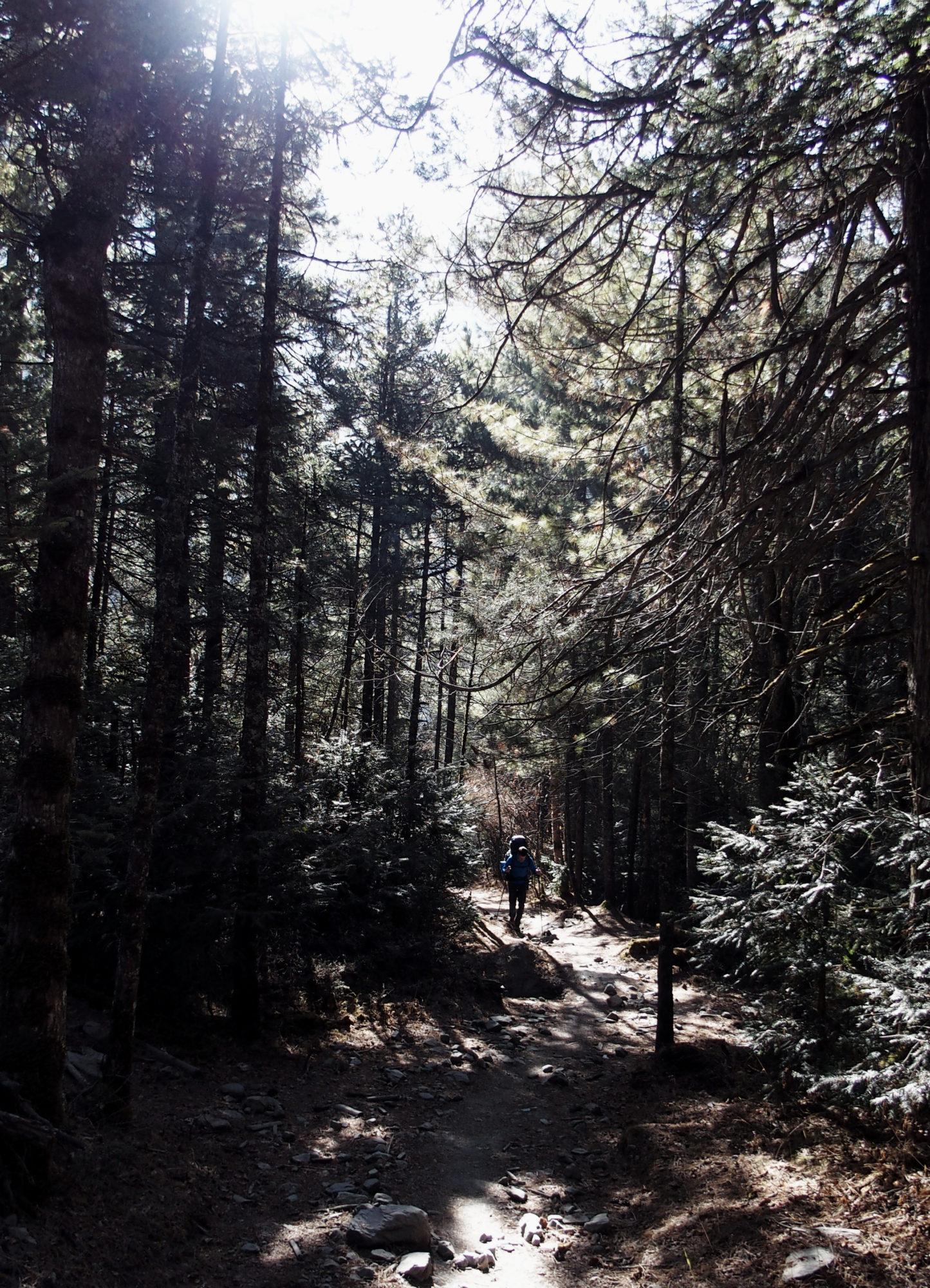 Sonnendurchfluteter Wald