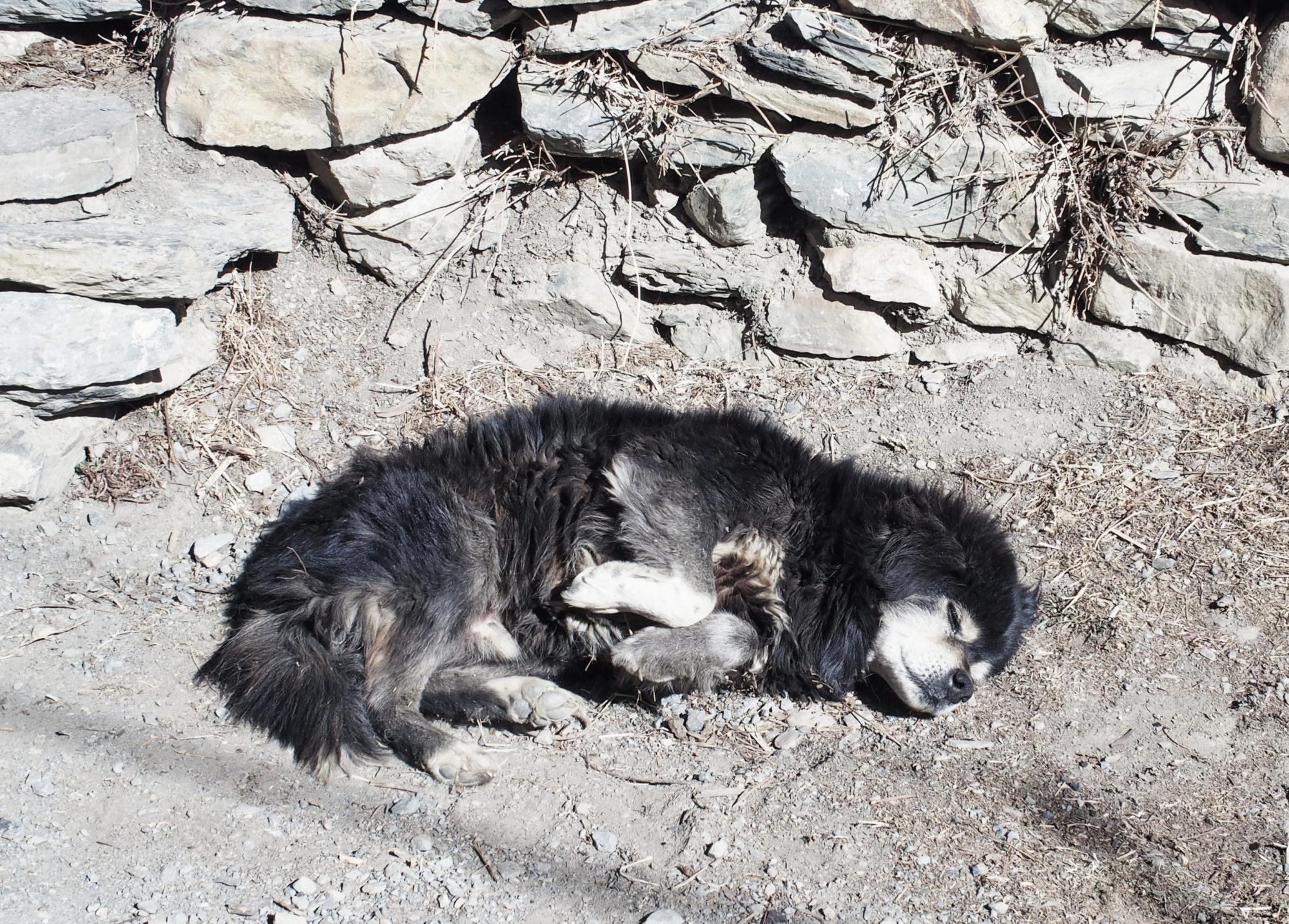Ein schlafender Hund auf dem Weg