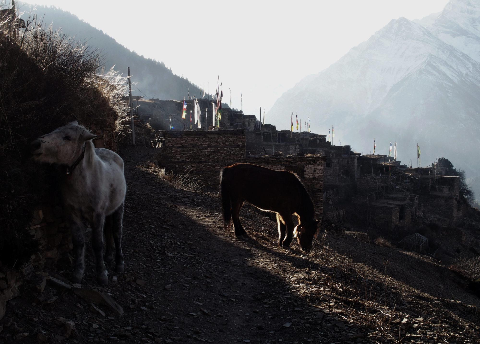 Sonnenlicht am Morgen in Ghyaru