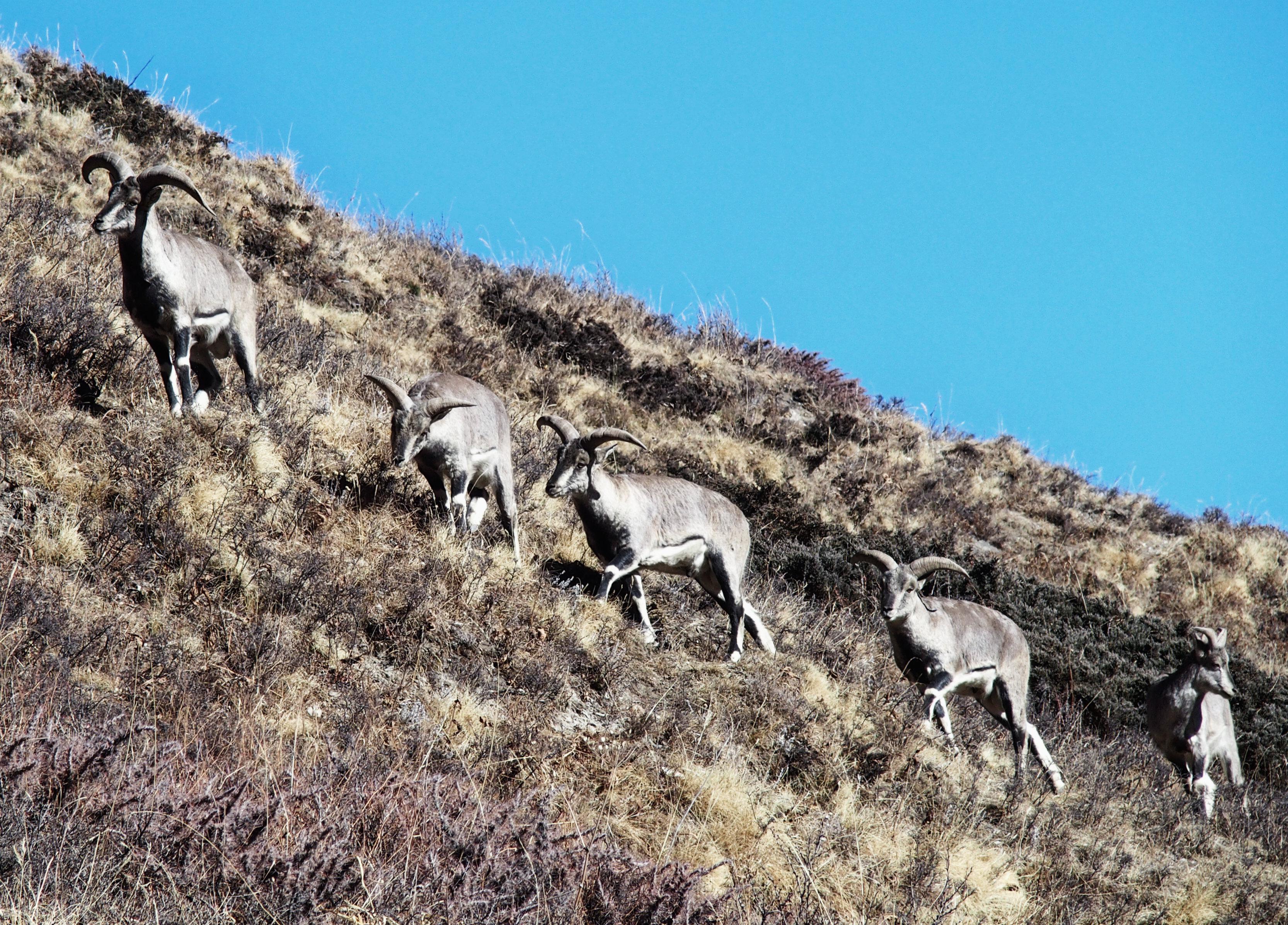 Tiere auf dem Annapurna Circuit