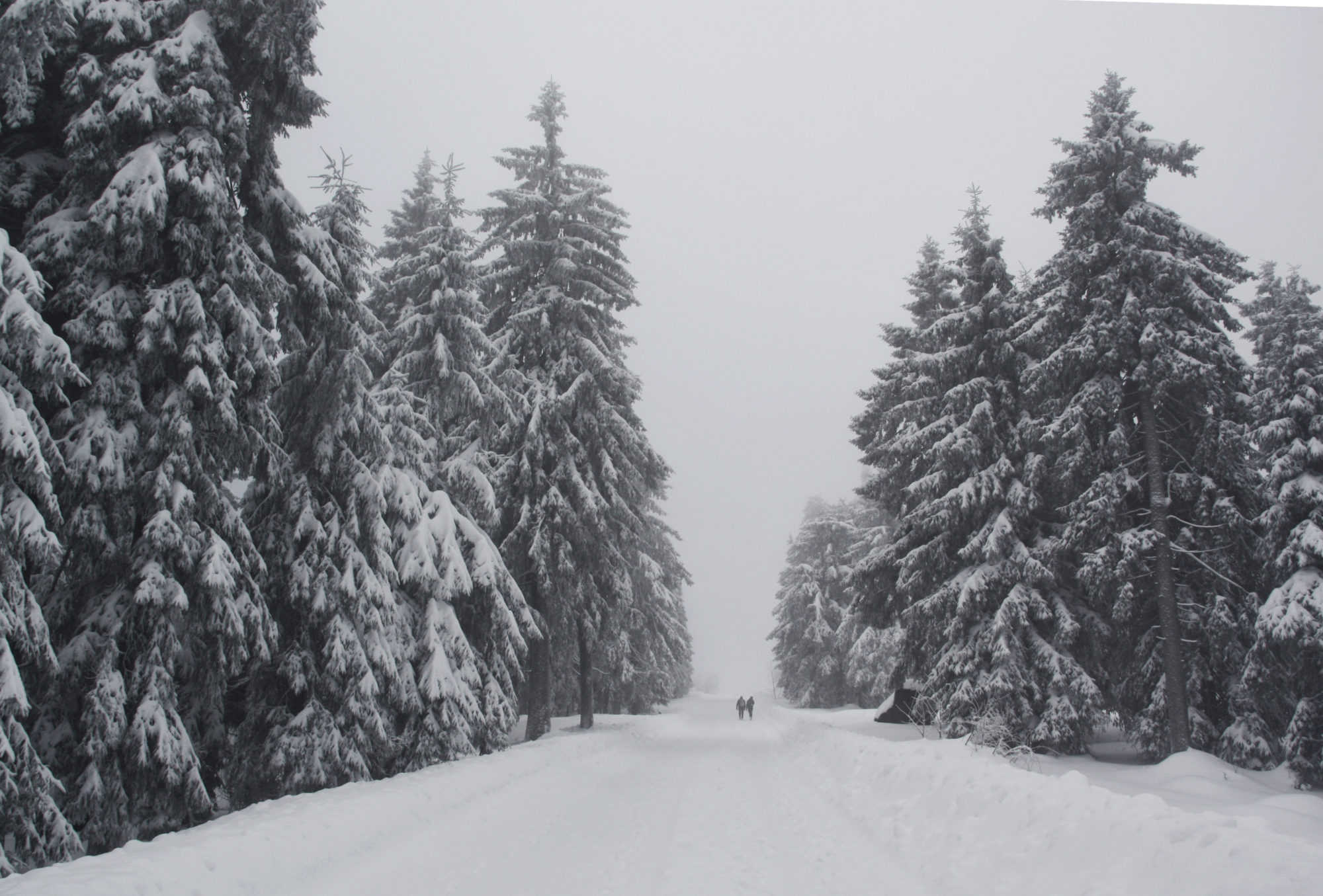 Aufstieg zum Schneeberg auf halbwegs gespurtem Weg