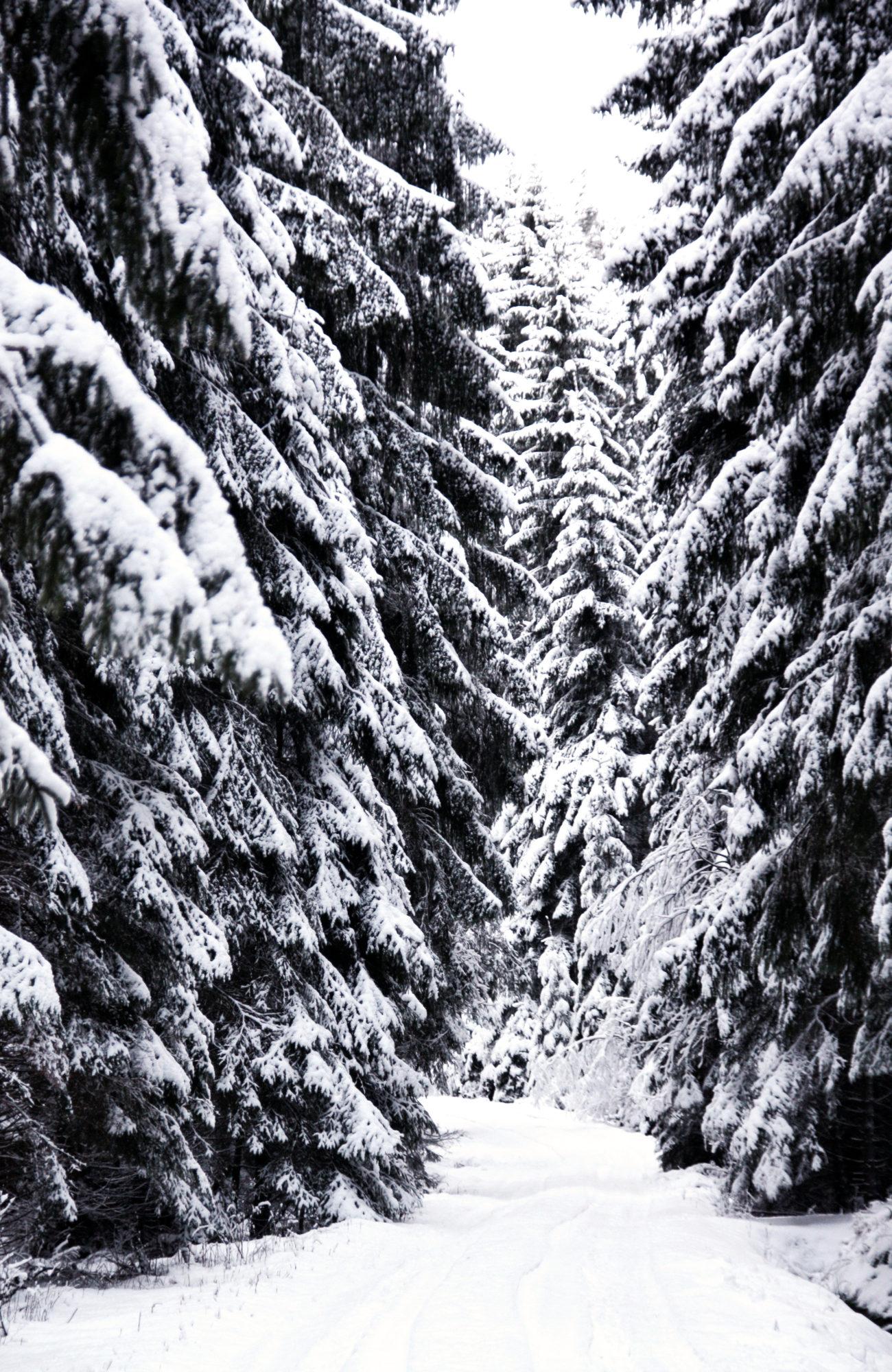Winter Wanderweg im Fichtelgebirge
