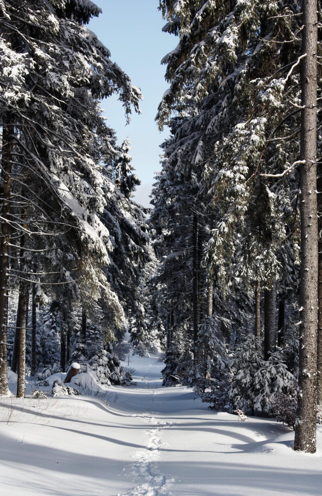 Winter Wanderweg im Fichtelgebirge mit Sonne