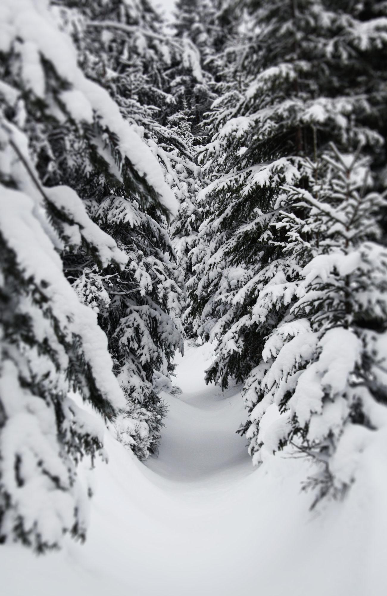 Höhenweg verschneit im Fichtelgebirge
