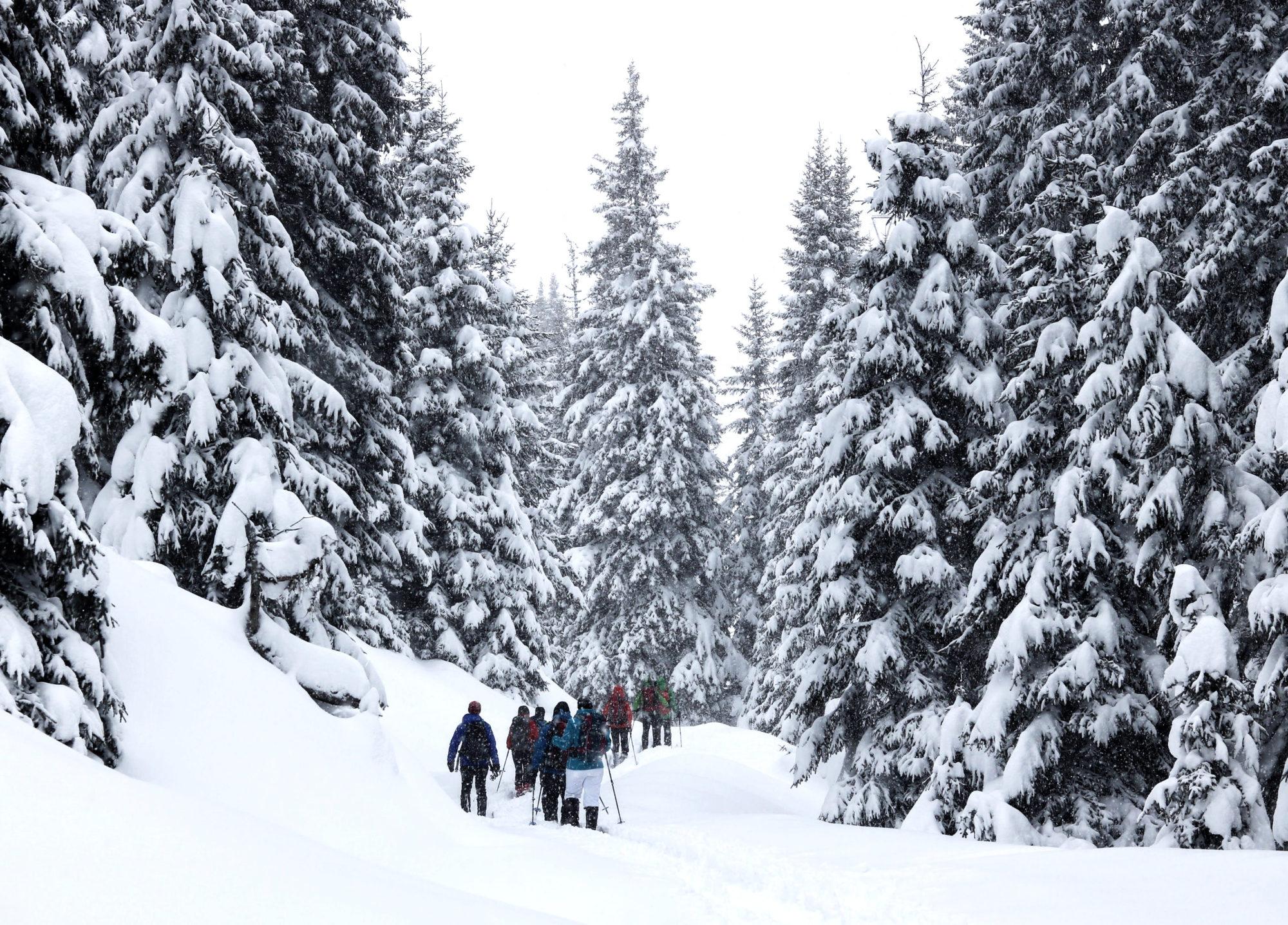 Schneeschuhwanderungen Brennerberge Tiefschnee