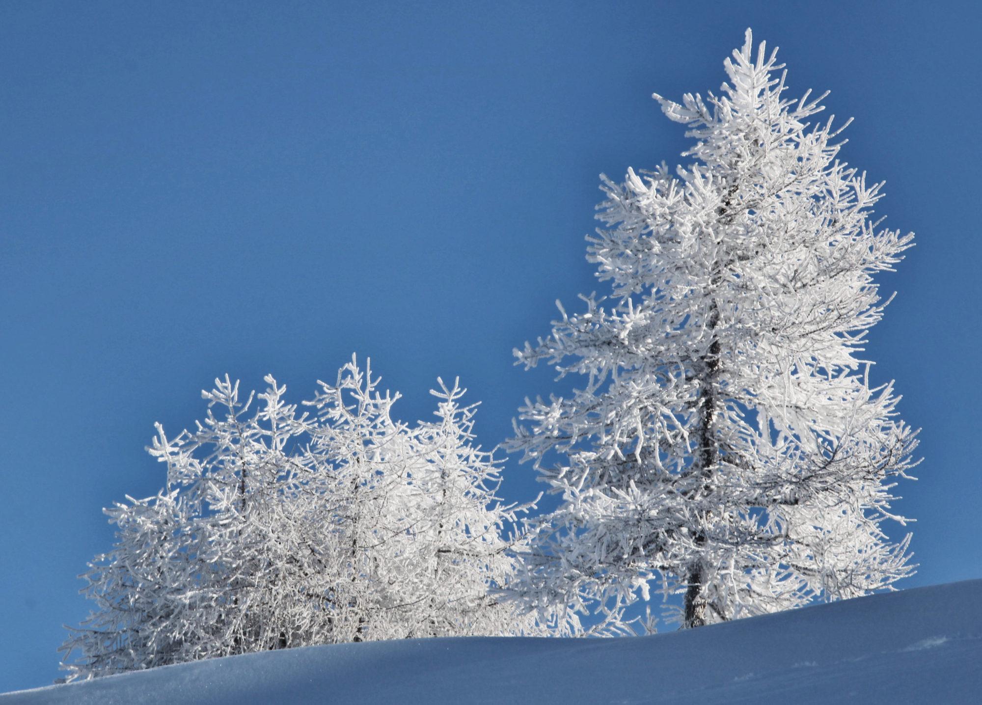 Schneebedeckt Bäume, Sonne, Brennerberge