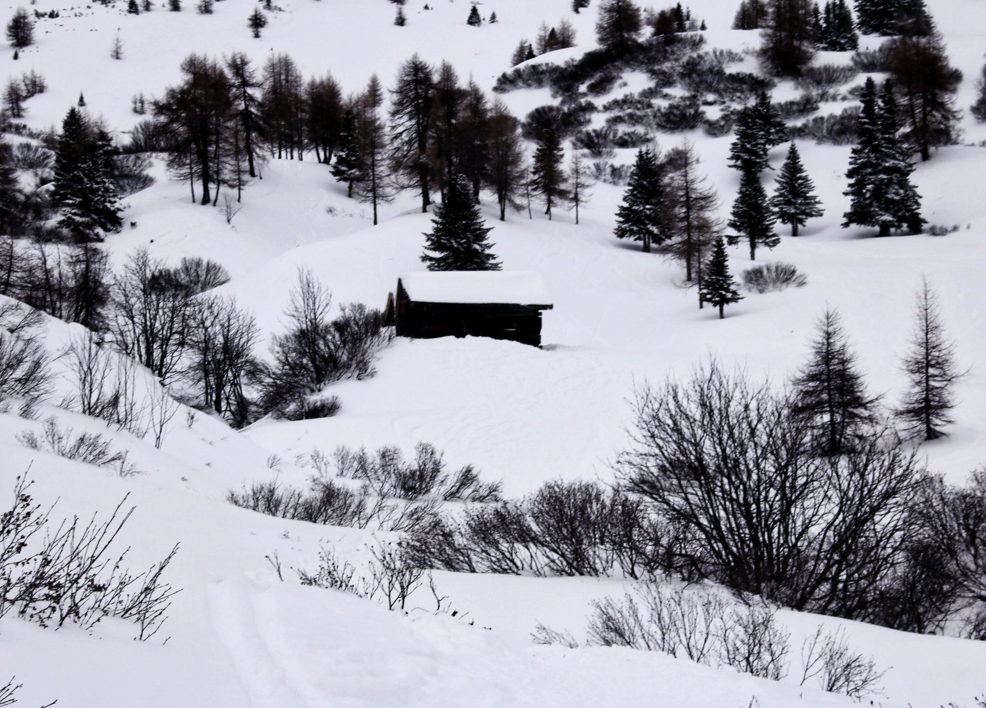 Schneeschuhwanderung Hoch über Hügel durch den Wald