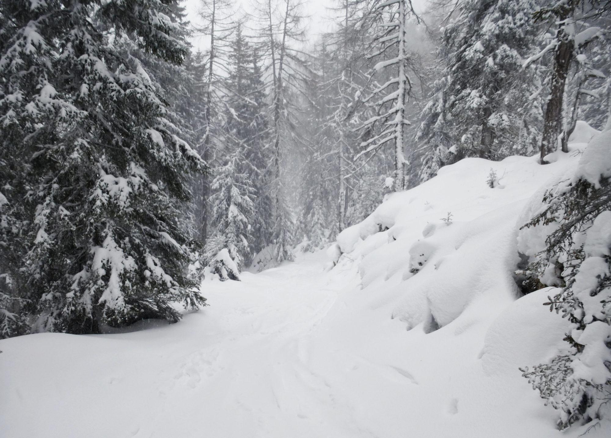 Nebel Schneeschuhtour Immerhin sieht man die nächsten Bäume.