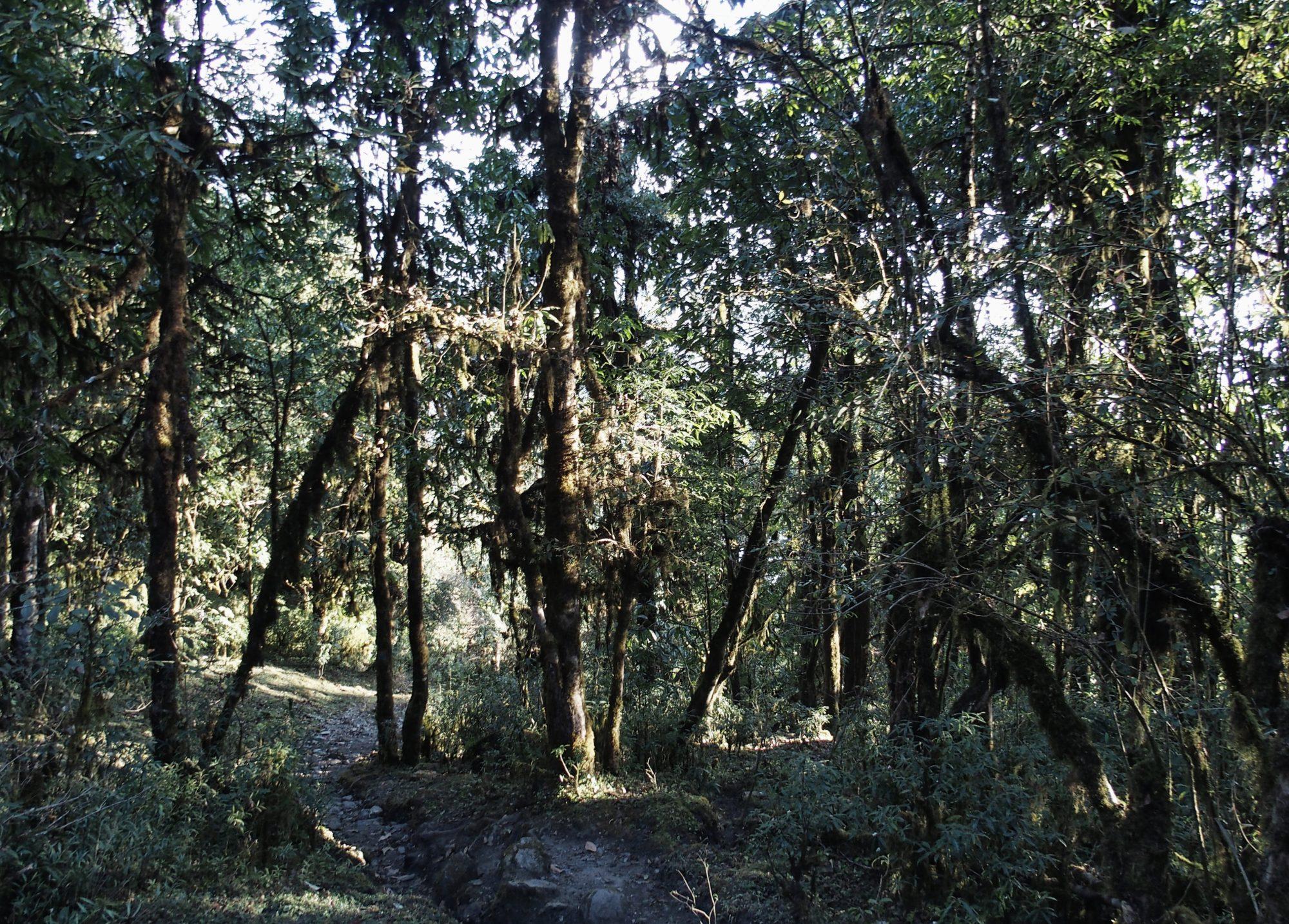 Annapurna Base Camp Trail mit Regenwald Feeling