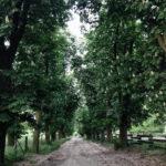 Wanderweg in Brandenburg auf dem Mammutmarsch