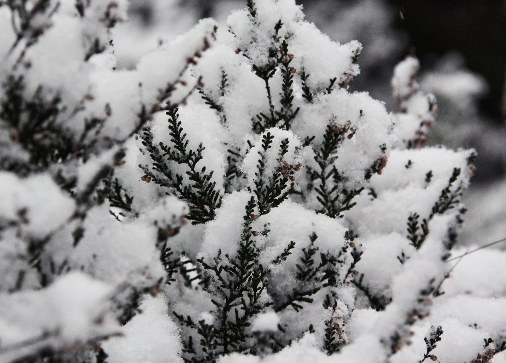 Winter, Elbsandsteingebirge, Sächsische Schweiz, Wandern, Wandertour