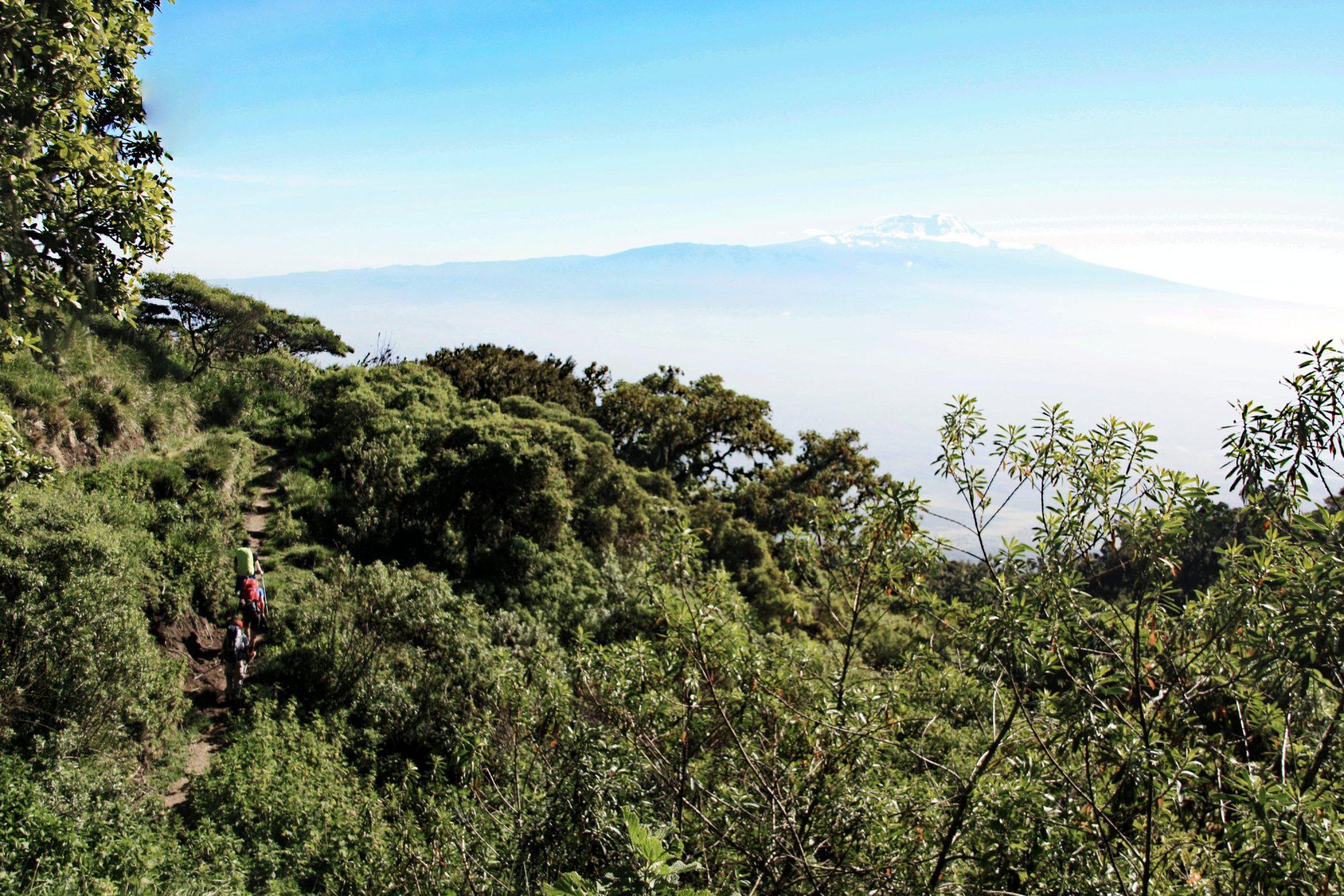 Wandern am Mount Meru mit Kilimandscharo Blick, Regenwald, Arusha Nationalpark, Tansania, Afrika