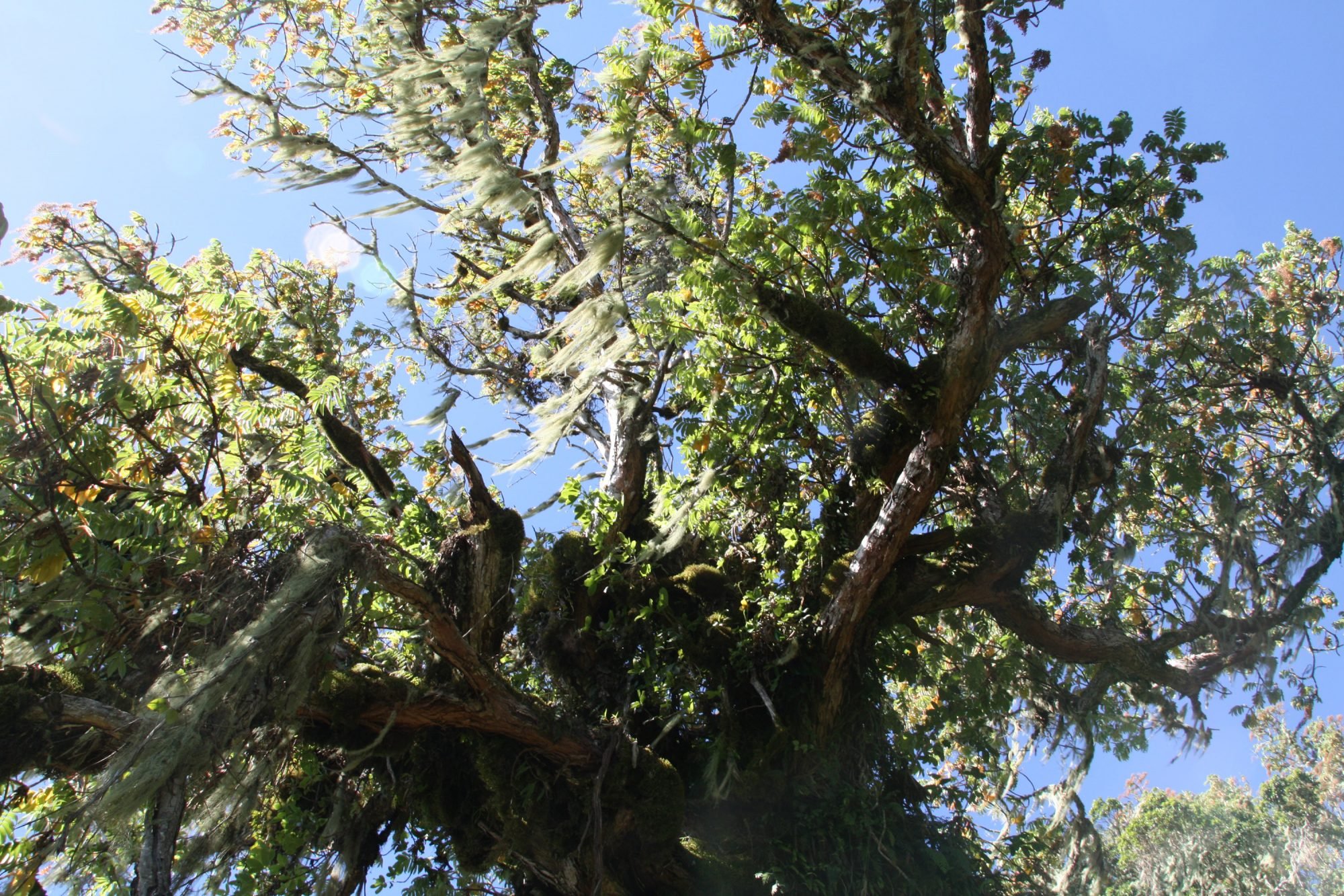 Regenwald am Mount Meru, Regenwald, Arusha Nationalpark, Tansania, Afrika