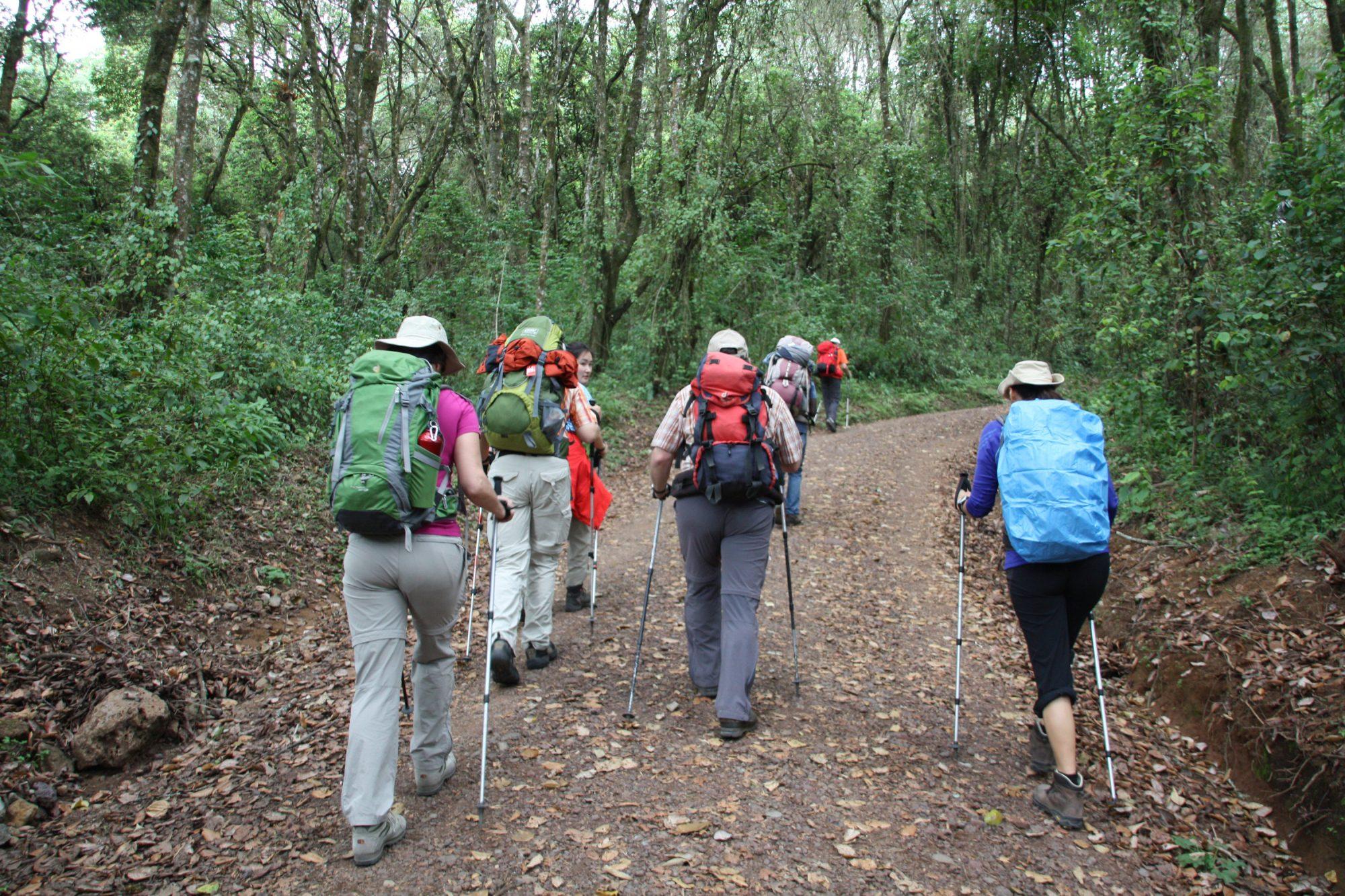 Forstweg am Machame Gate, Kilimandscharo, Kilimandscharo besteigen, Tansania, Afrika, Kilimandscharo Tour, Erfahrungsbericht, Machame Route