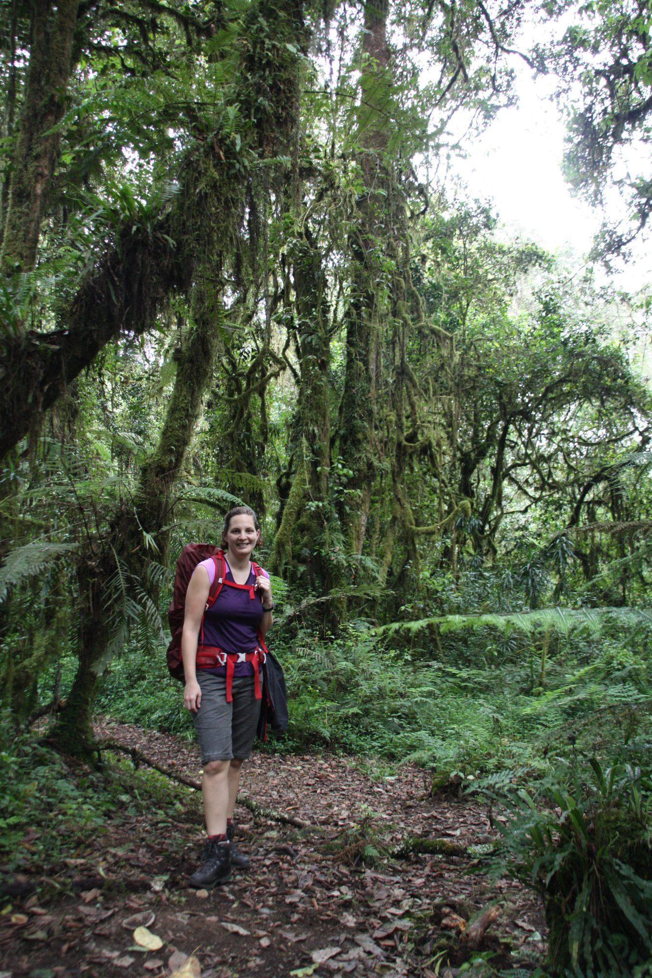 Regenwald und Wanderer, Kilimandscharo, Kilimandscharo besteigen, Tansania, Afrika, Kilimandscharo Tour, Erfahrungsbericht, Machame Route