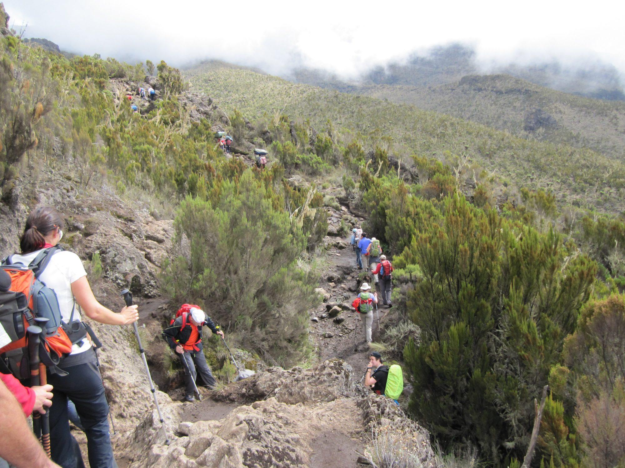Heidelandschaft Kilimandscharo, Kilimandscharo besteigen, Tansania, Afrika, Kilimandscharo Tour, Erfahrungsbericht, Machame Route