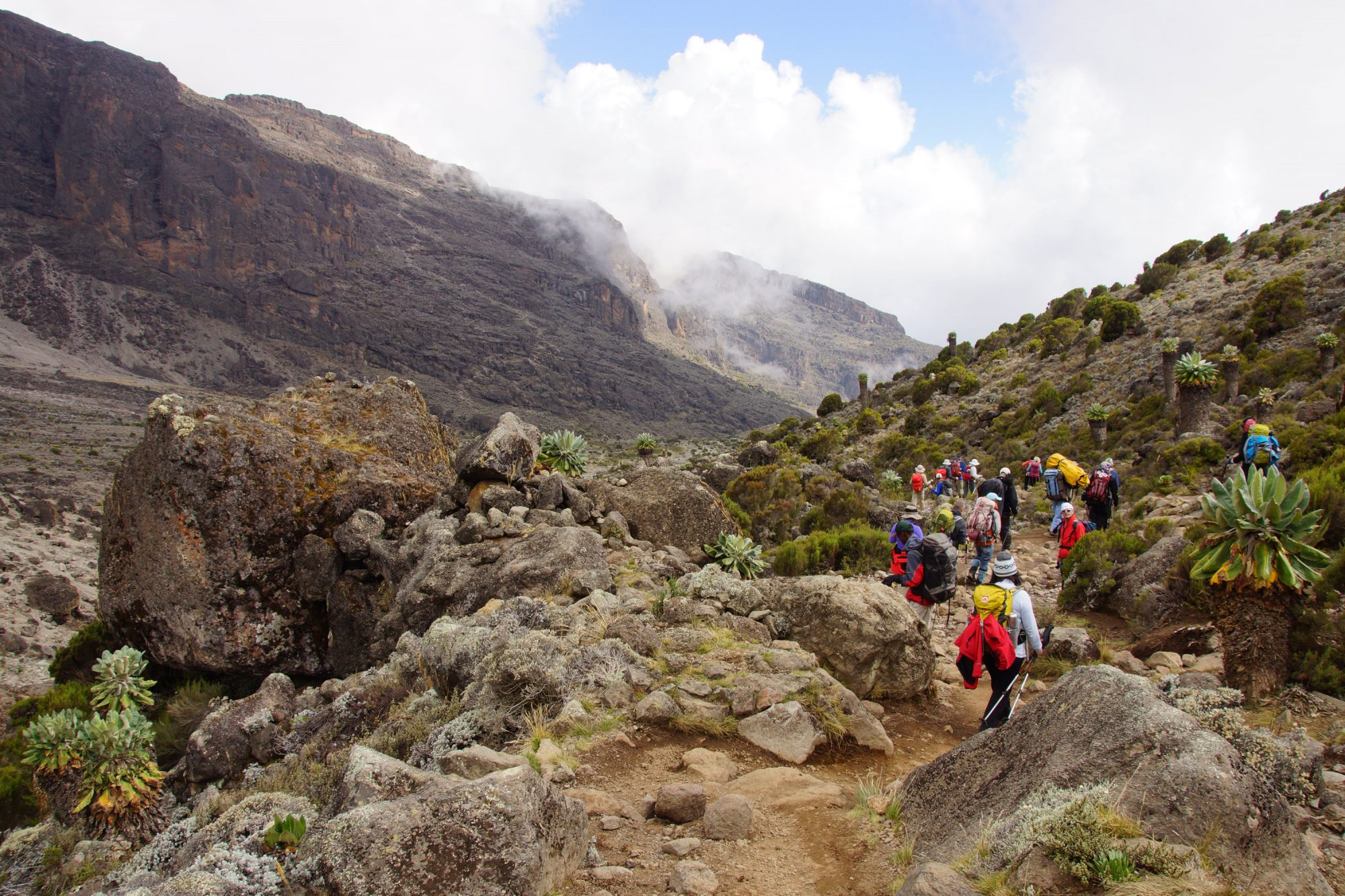 Senecien Kilimandscharo, Kilimandscharo besteigen, Tansania, Afrika, Kilimandscharo Tour, Erfahrungsbericht, Machame Route