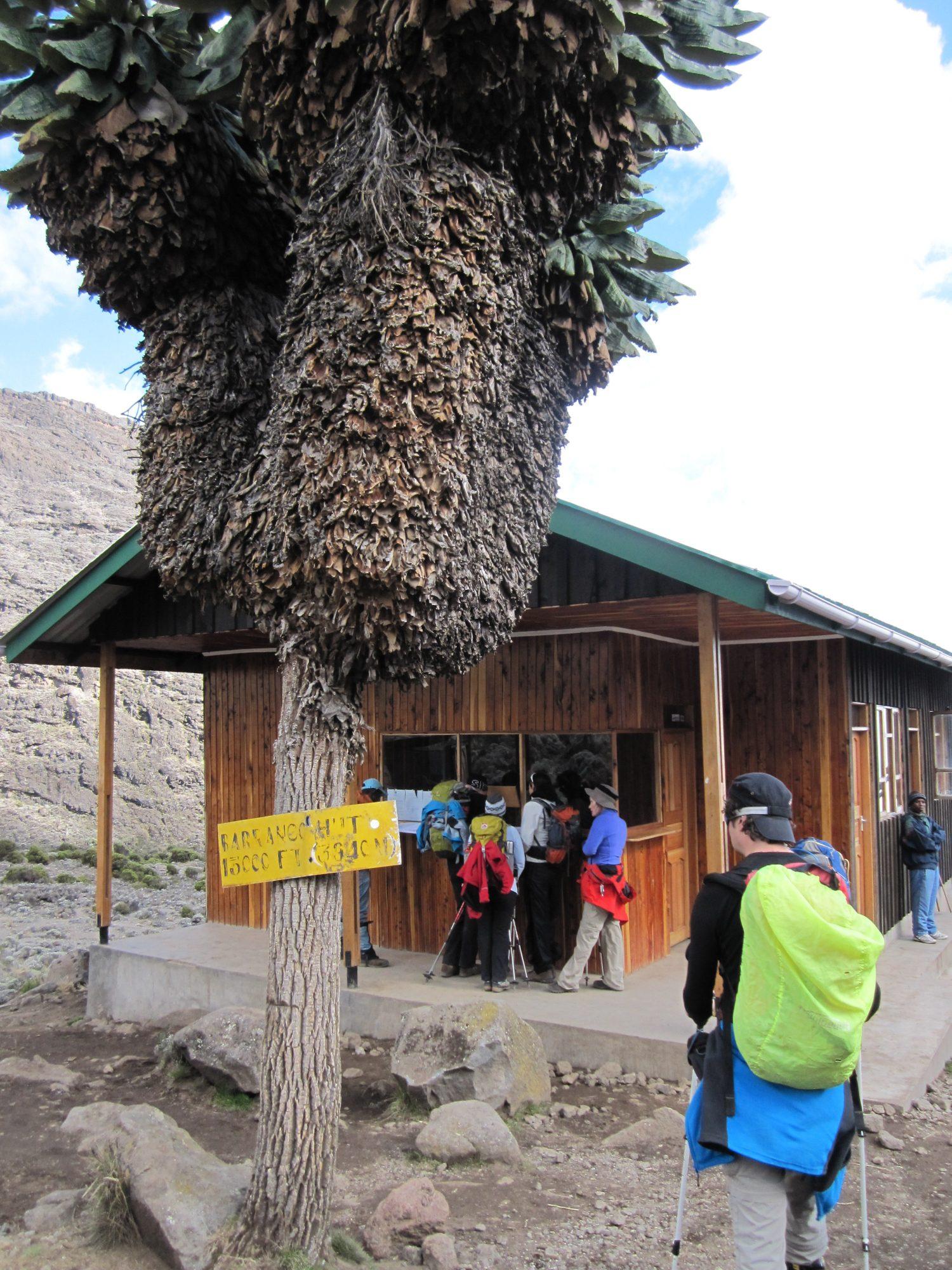 Check-in, Barranco Camp, Kilimandscharo, Kilimandscharo besteigen, Tansania, Afrika, Kilimandscharo Tour, Erfahrungsbericht, Machame Route