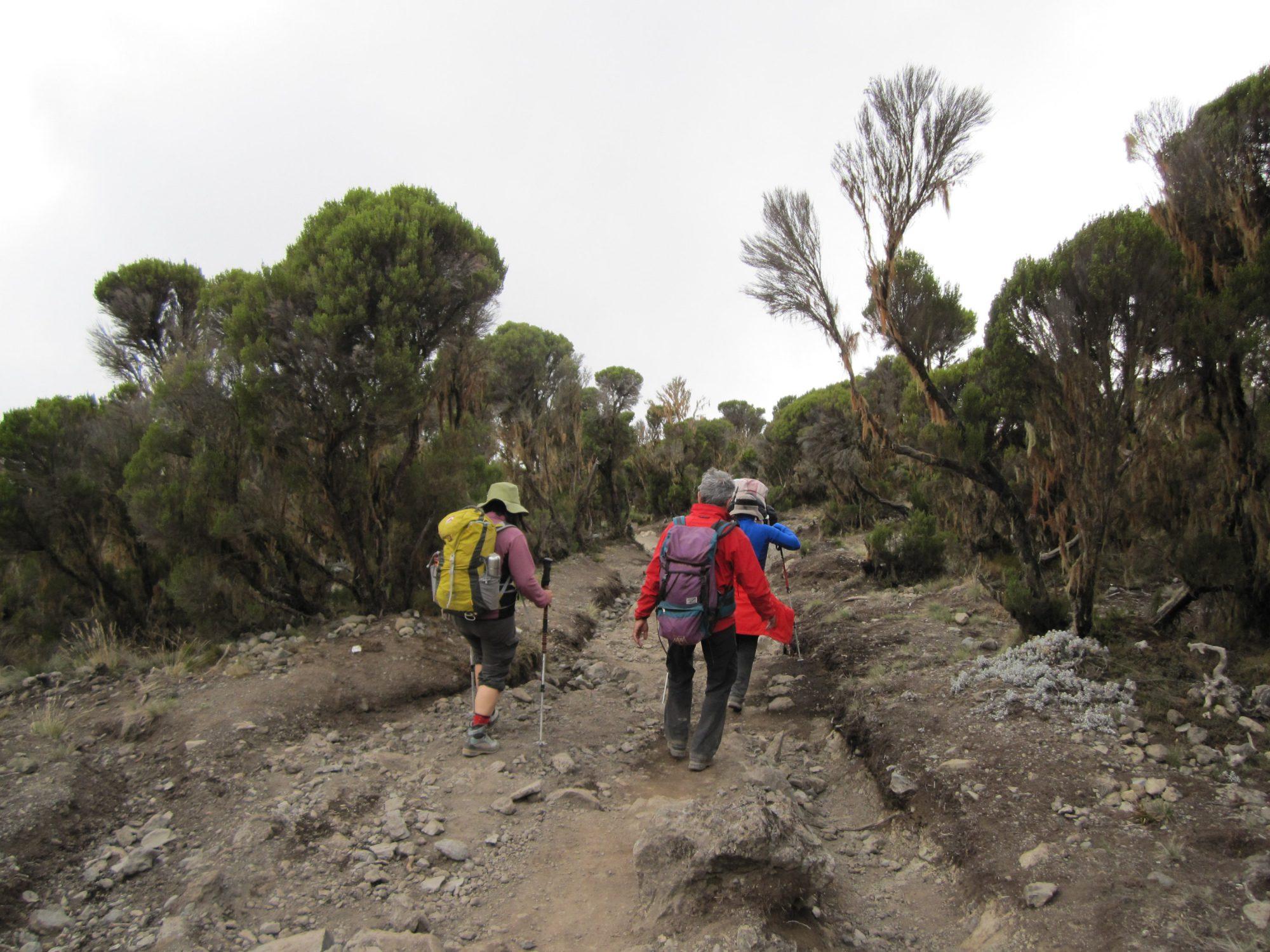 Flussbetten am Kilimandscharo, Kilimandscharo besteigen, Tansania, Afrika, Kilimandscharo Tour, Erfahrungsbericht, Machame Route