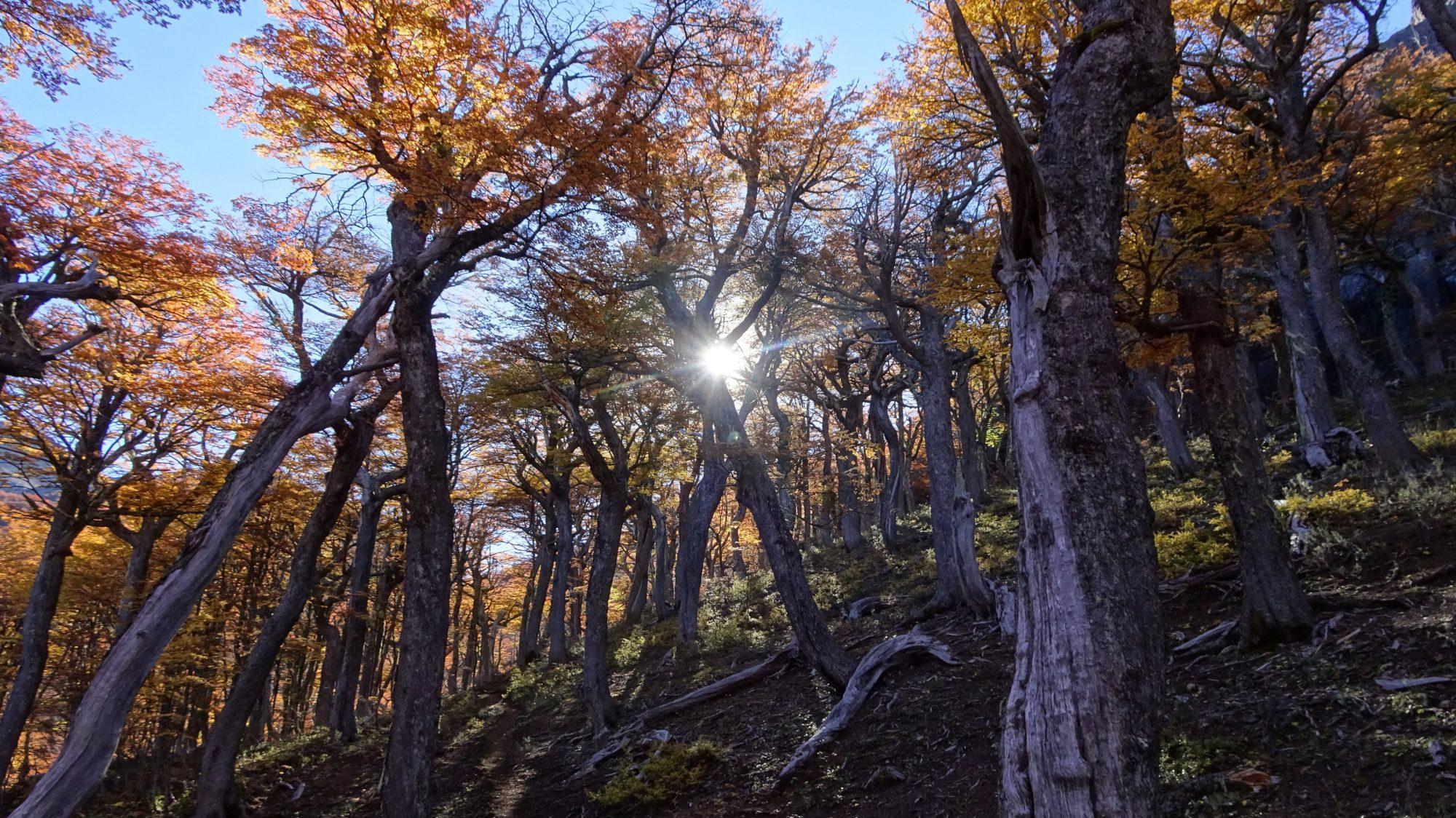 Fjella El Bolson Wanderung Patagonien Warton Dedo Gordo Encanto Blanco Wanderroute Wandern Herbstwald