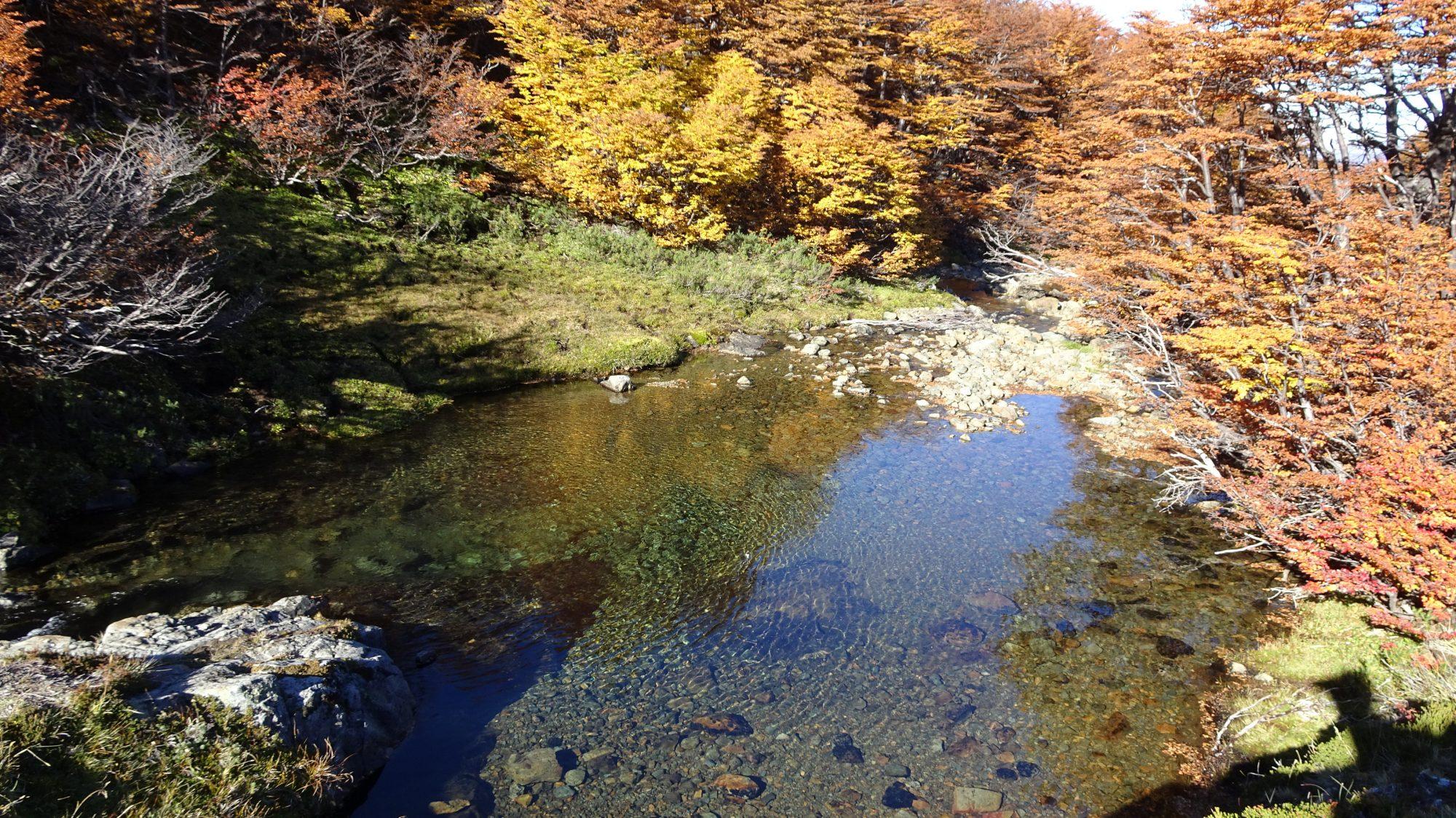 Fjella El Bolson Wanderung Patagonien Warton Dedo Gordo Encanto Blanco Wanderroute Wandern Bach Herbst