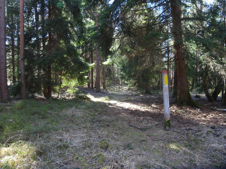 Forststeig, Elbsandsteingebirge, Sächsische Schweiz, Böhmische Schweiz, Trekking, Wandern, Wanderung