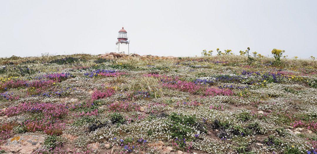 Berlenga Portugal
