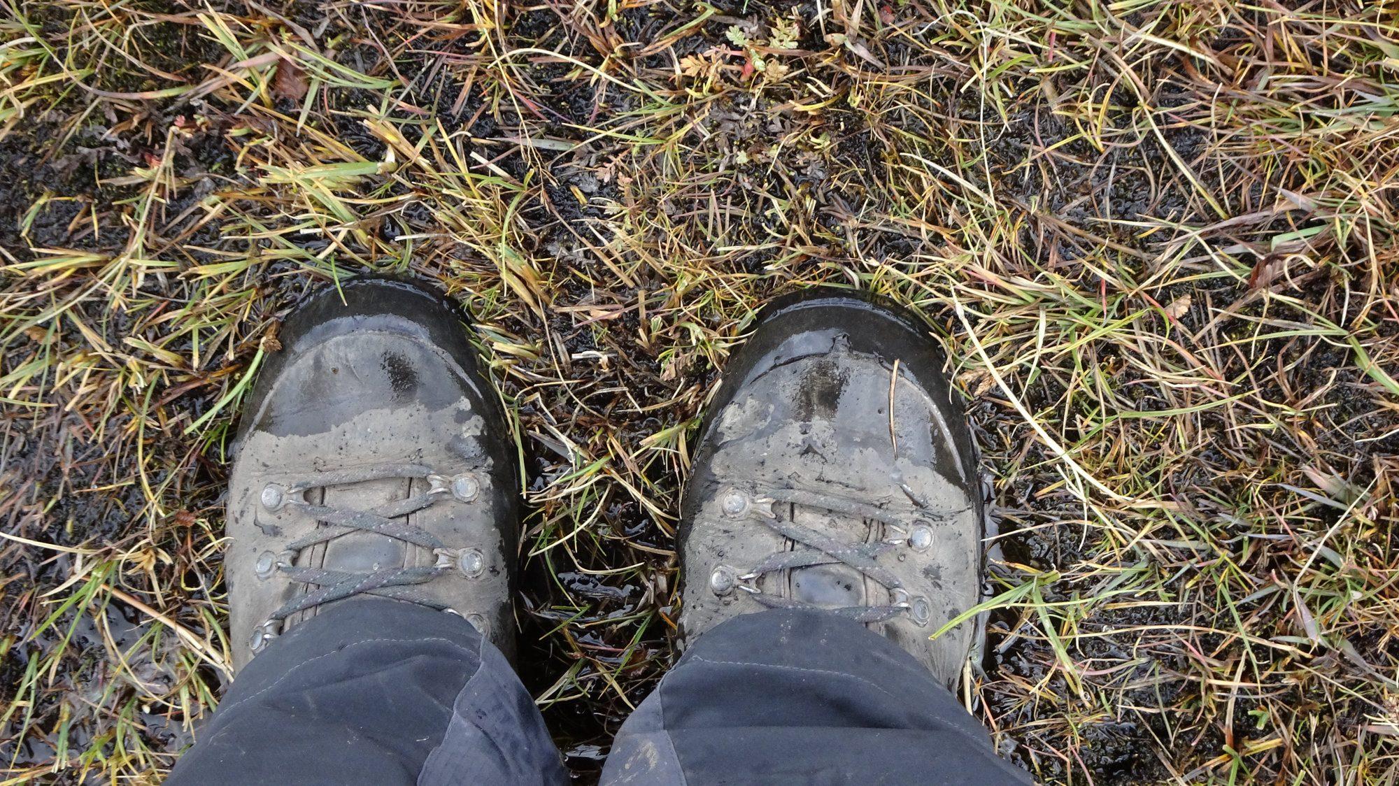 Feuchtgebiet auf dem Huemul Circuit, El Chaltén, Patagonien, Argentinien, Wanderung, Trekking