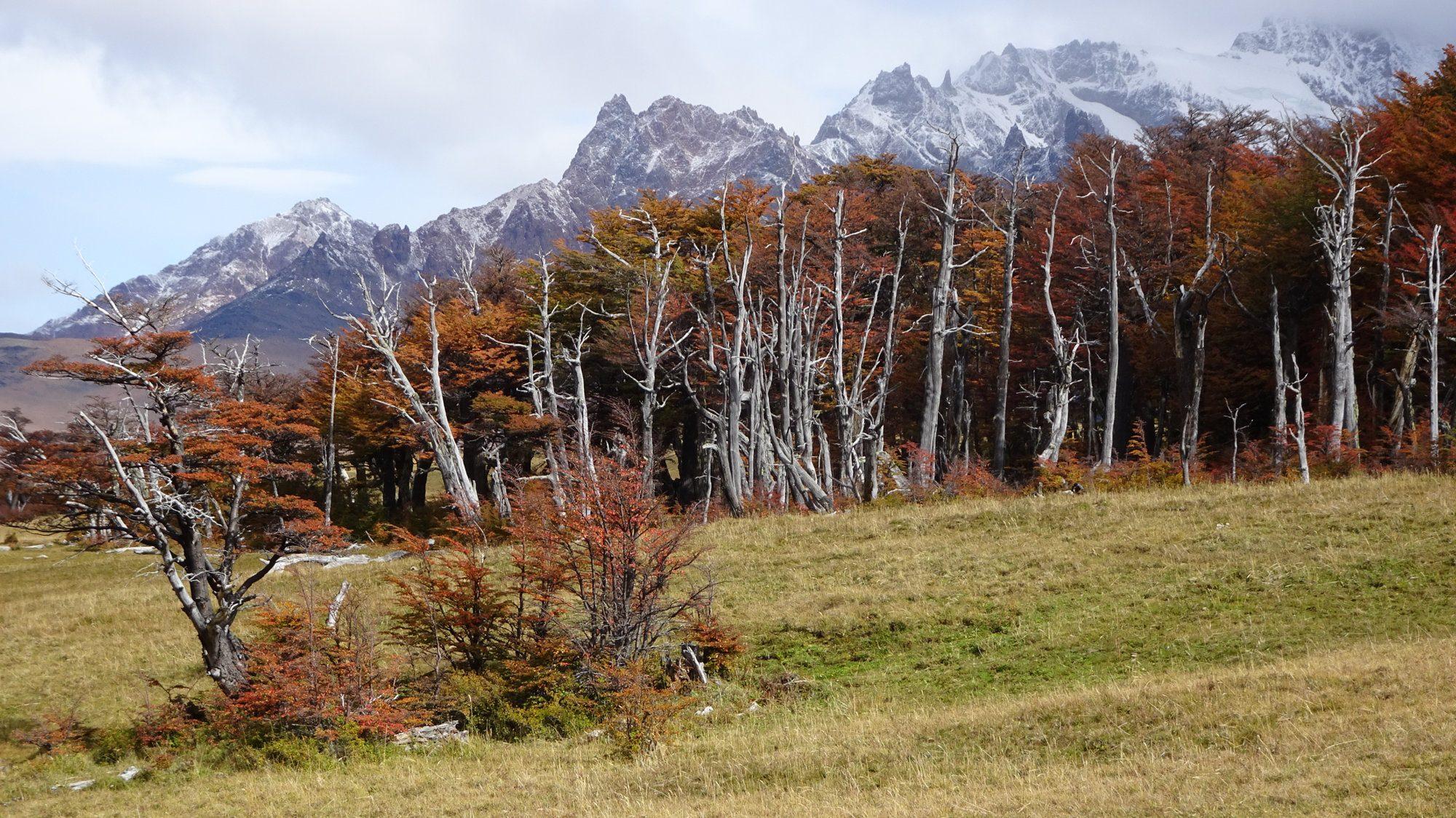 Herbstwälder Huemul Circuit, El Chaltén, Patagonien, Argentinien, Wanderung, Trekking
