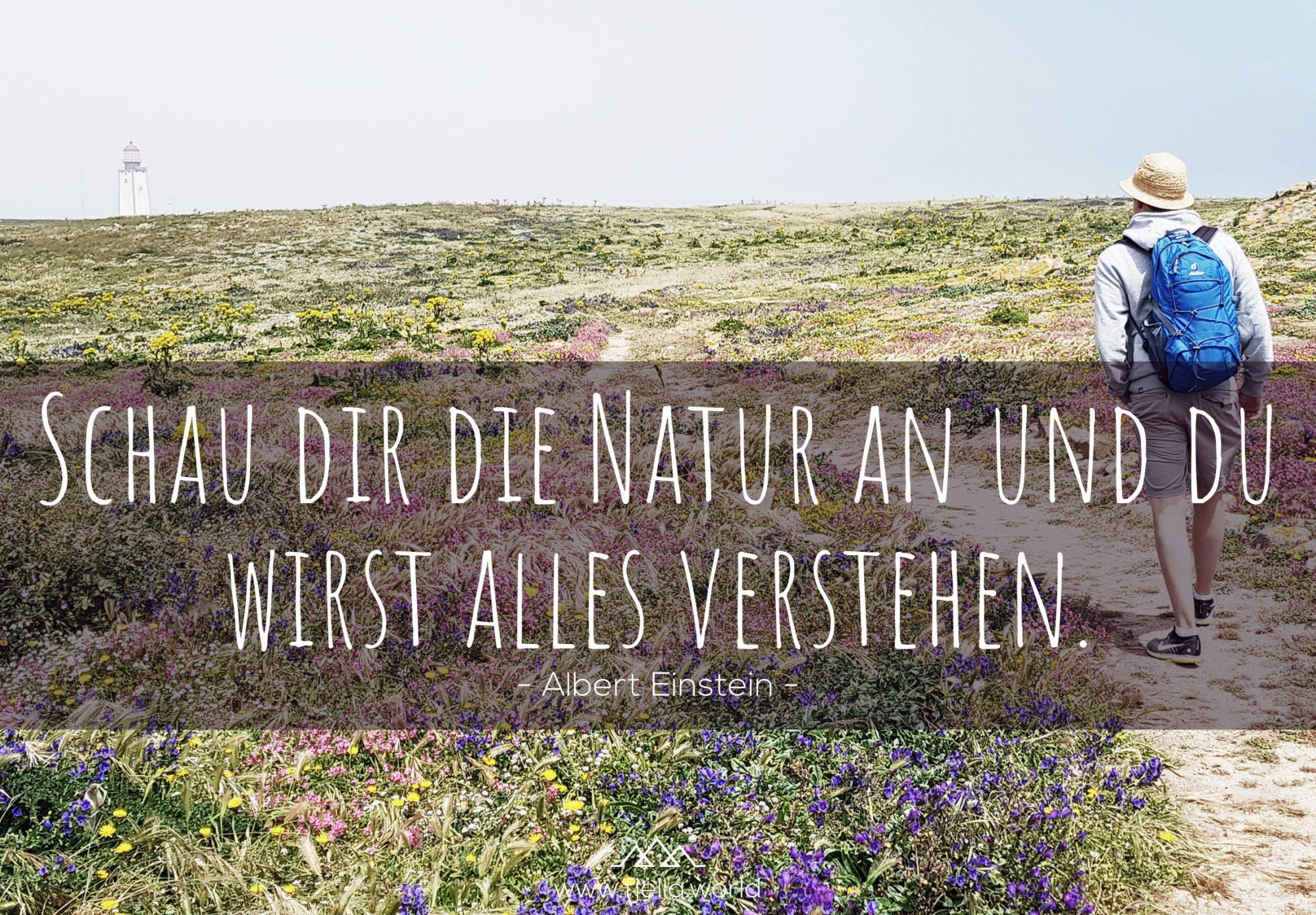 Schau dir die Natur an und du wirst alles verstehen. Albert Einstein. Wandersprüche, Sprüche Wandern, Zitate Wandern, Wanderzitate, Bergzitate, Motivation Zitate, Inspiration Zitate, Motivation