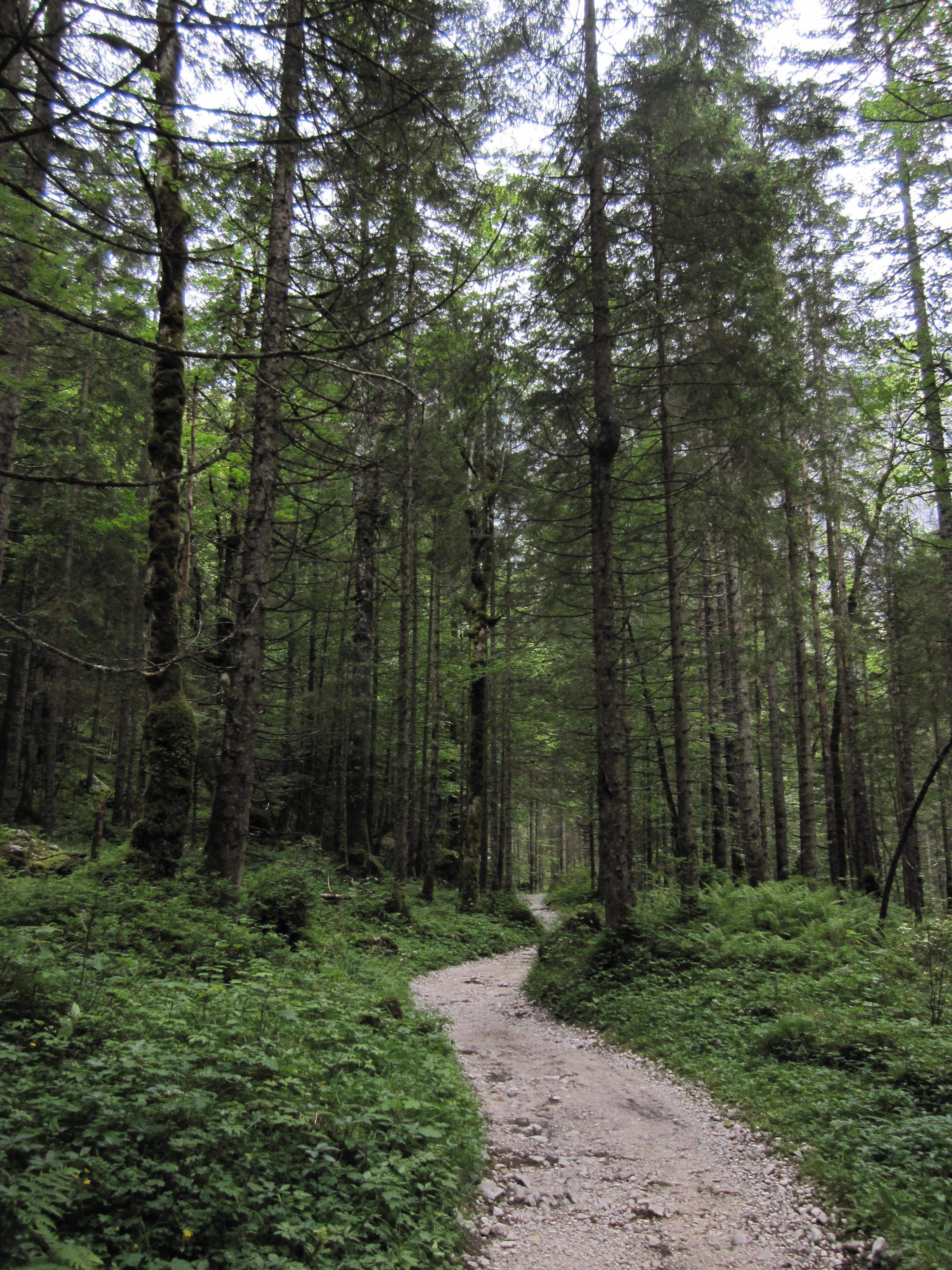 Einfacher Waldweg, Durchs Reintal auf die Zugspitze Hüttentour Fjella