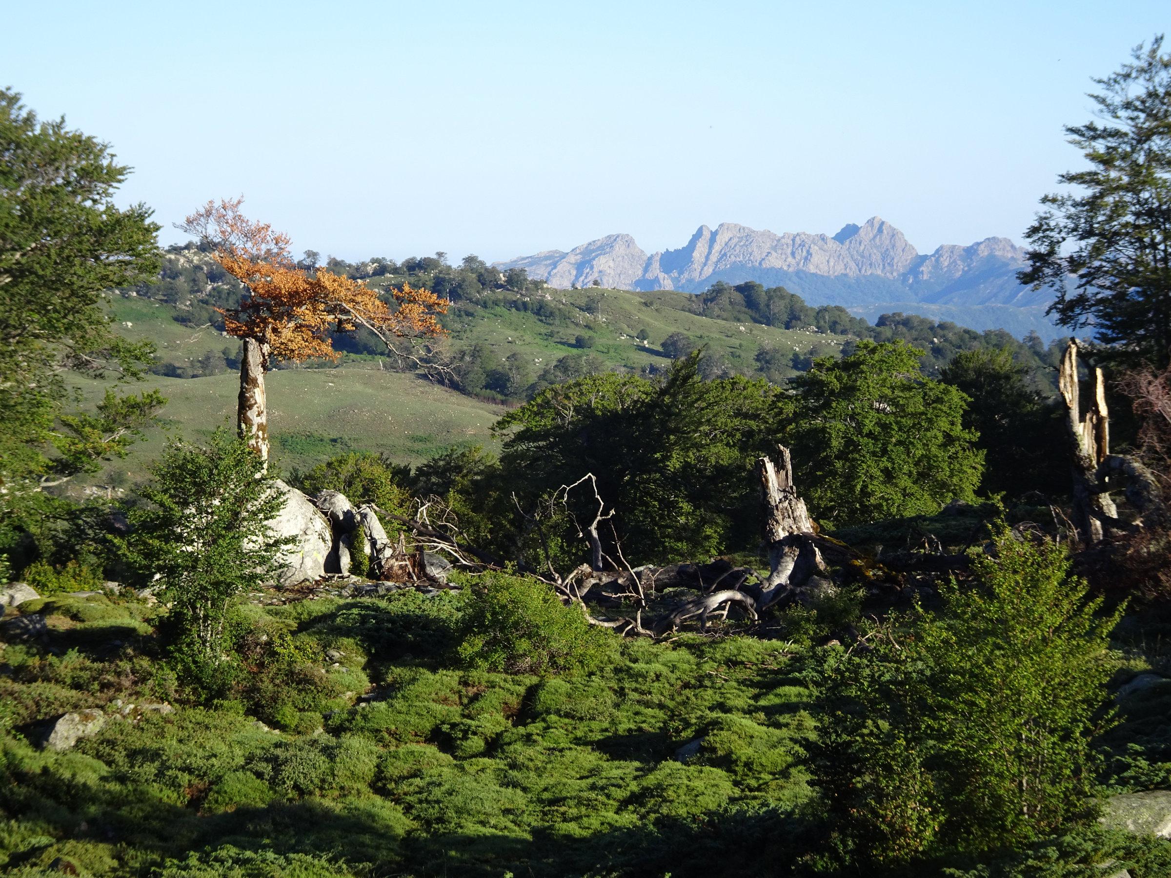 Wunderschönes Licht am Morgen auf dem GR20, Korsika, GR20 Weitwanderweg, Wandern, Berge, Frankreich