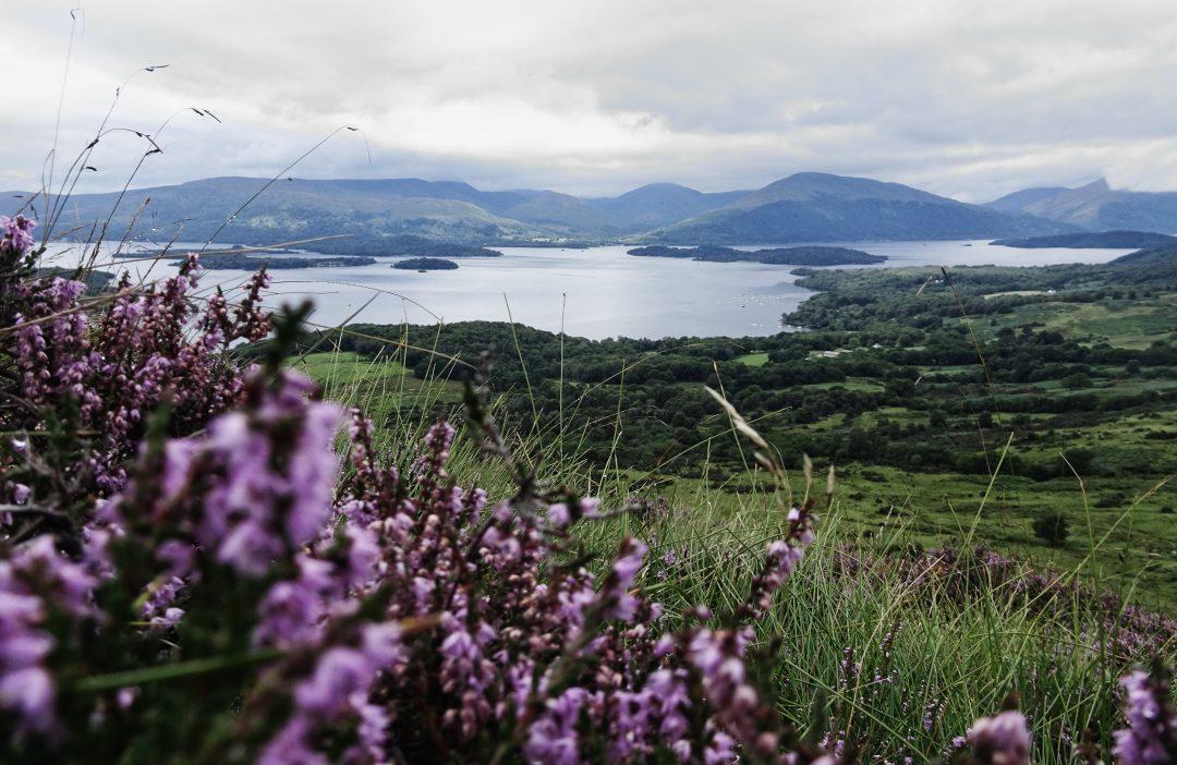 Ausblick vom Conic Hill mit blühender Heide, West Highland Way, Schottland, Wanderung, Weitwandern, Trekking, Highlands