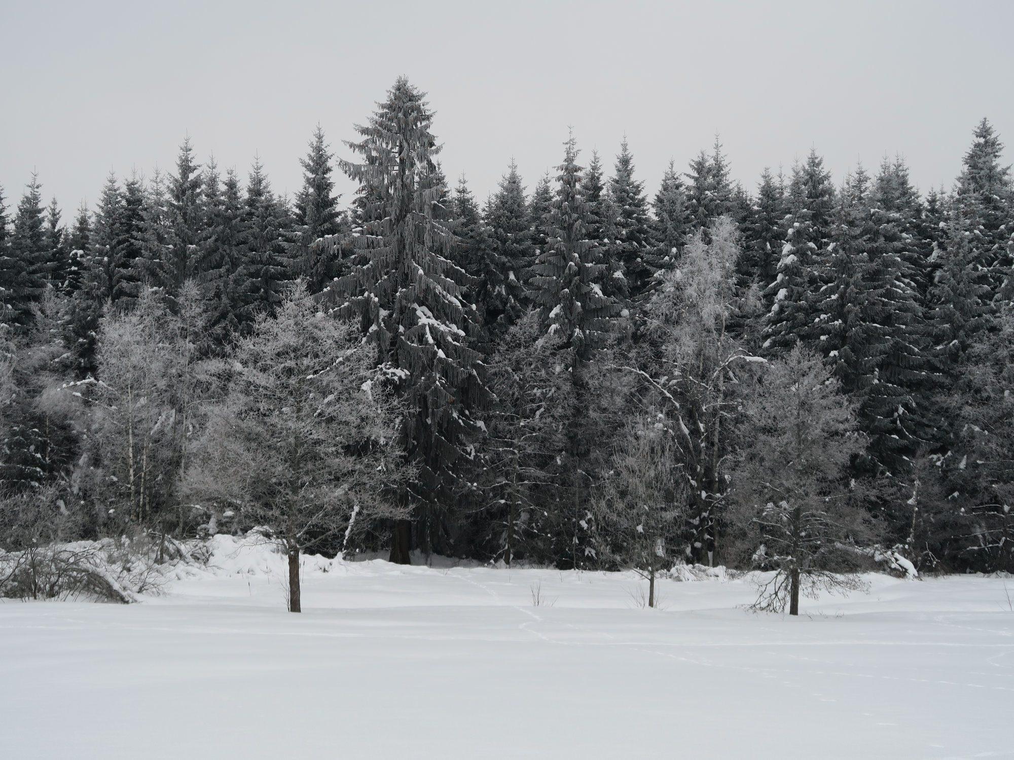 Kammloipe, Langlaufen im Vogtland, Ergebirge