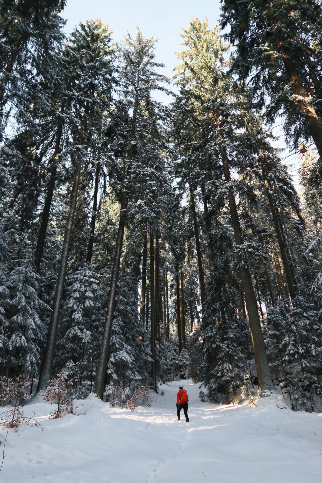 Traumhaft verschneite Landschaft beim Winterwandern im Vogtland, Felsenweg, Grünbach