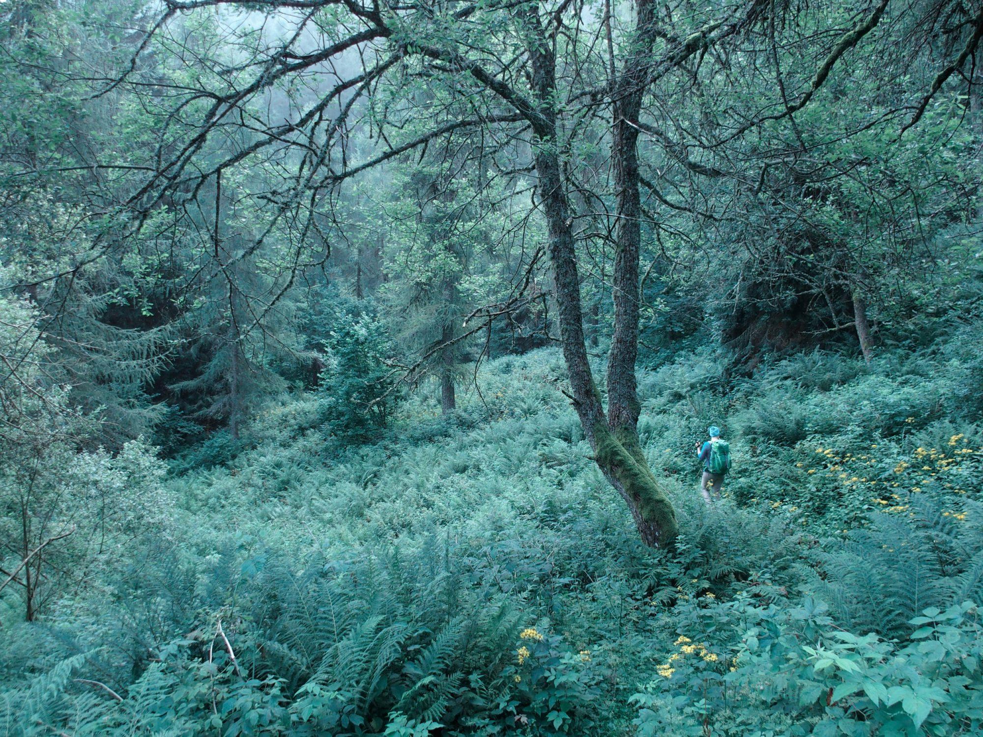 Im Waldschungel, Alpenüberquerung Traumpfad Venedig-München Weitwanderung