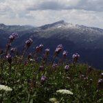 4 schönste Wanderungen im Kleinwalsertal Titelbild