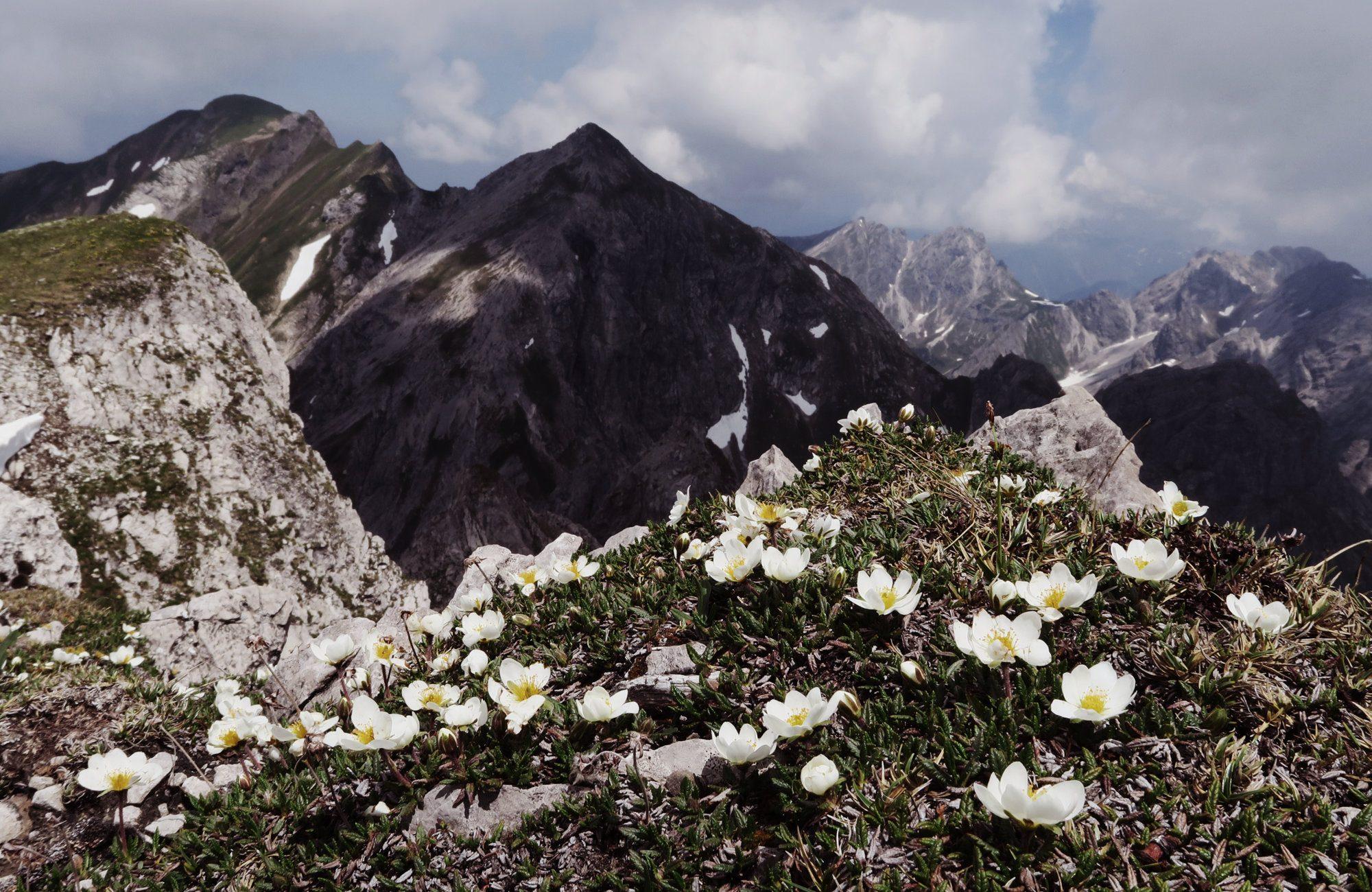 Ausblick vom Gipfel des Geißhorn