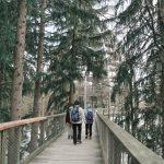 Bayerischer Wald Baumwipfelpfad, Nationalparkzentrum Lusen