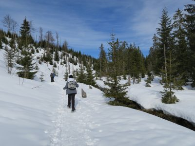 Winterwanderung auf den Siebensteinkopf, Schneeschuhwandern Winterwandern Bayerischer Wald