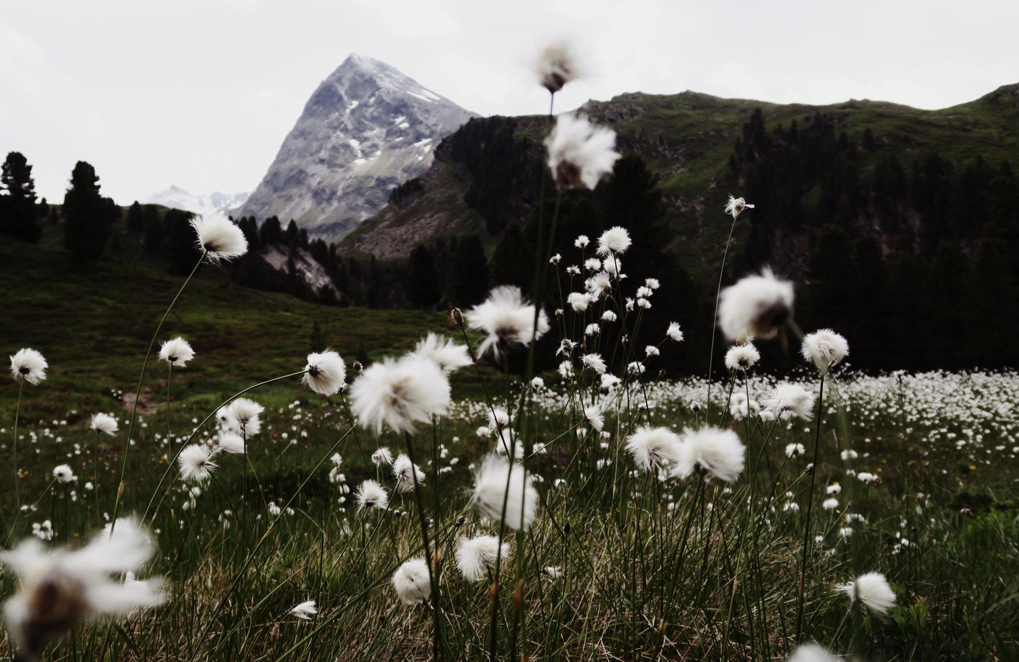 Blick zum Hangerer, Wanderung Hangerer, Bergwandern Ötztal, Wandertour Ötztal, Alpen, Tirol, Dreitausender
