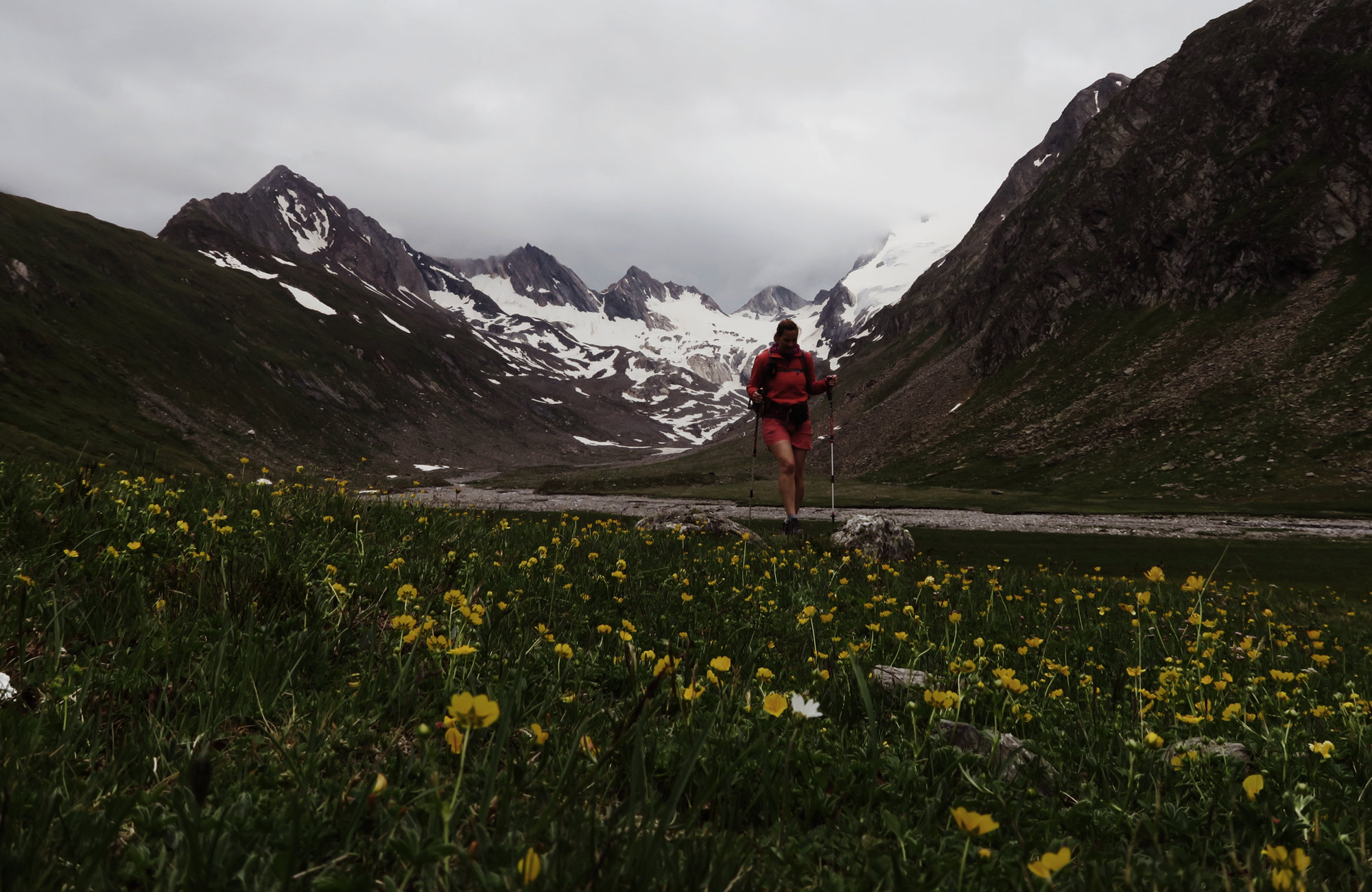 Durch Blumenfelder bis zum Rotmoosferner, Wandertour Rotmoosferner und Gaisbergtal, Wandern im Ötztal, Wandertour Ötztal, Alpen, Tirol, Gletscher