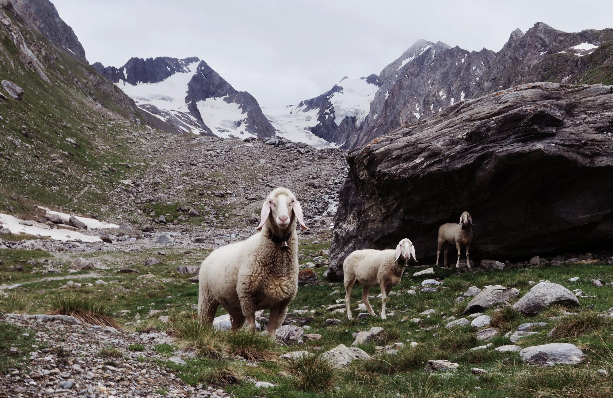 Wandern im Gaisbergtal, Wandertour Rotmoosferner und Gaisbergtal, Wandern im Ötztal, Wandertour Ötztal, Alpen, Tirol, Gletscher
