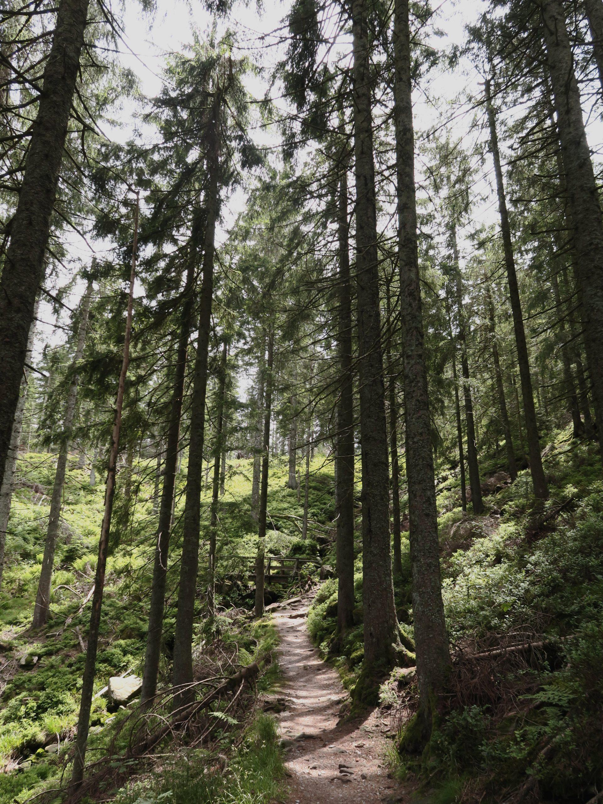 Idyllischer Wanderweg im Schwarzwald