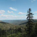 Wilde Natur unterhalb des Hornisgrinde Gipfels, Trekking im Schwarzwald