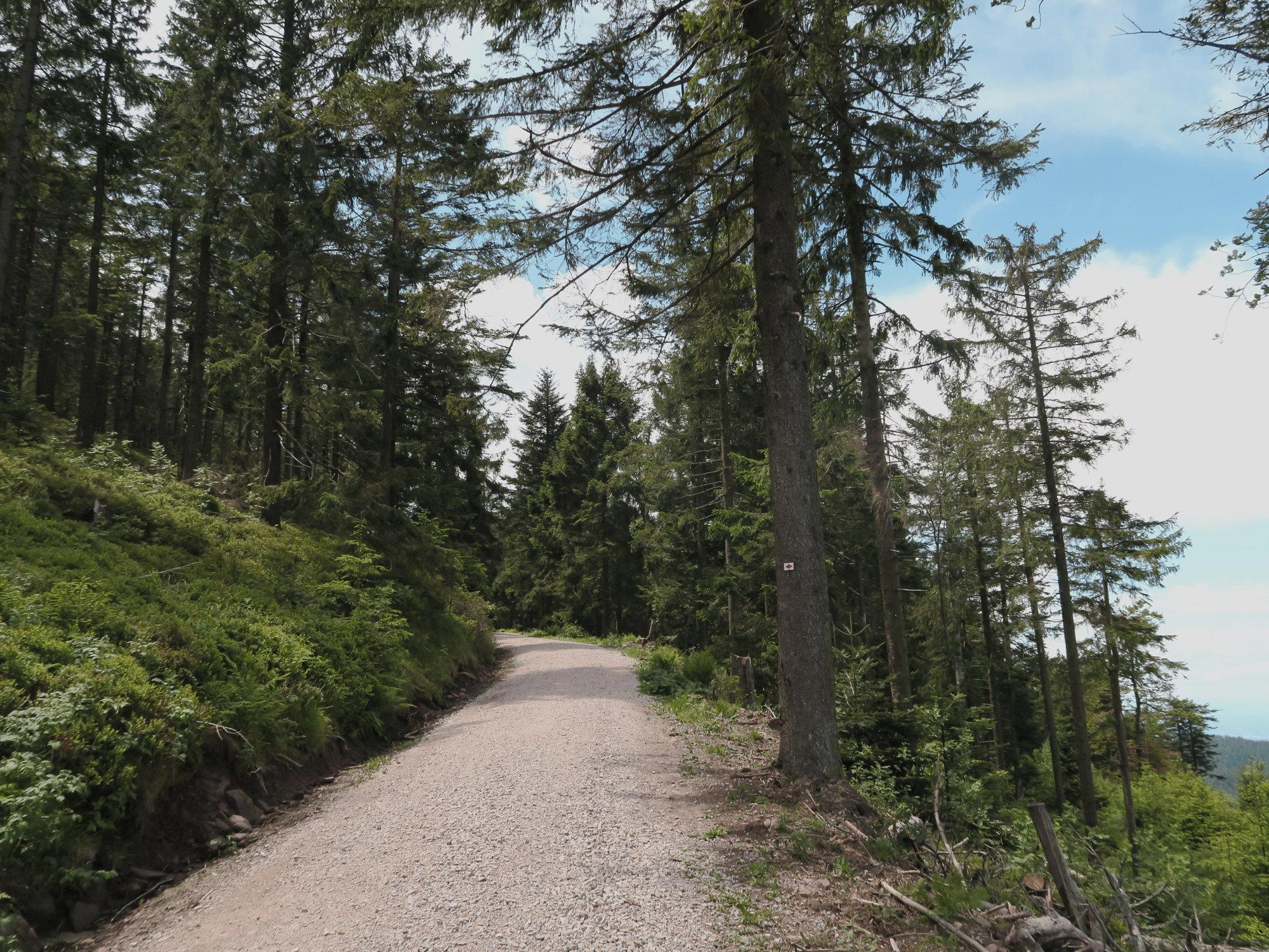 Forstweg im Schwarzwald, Trekkingtour