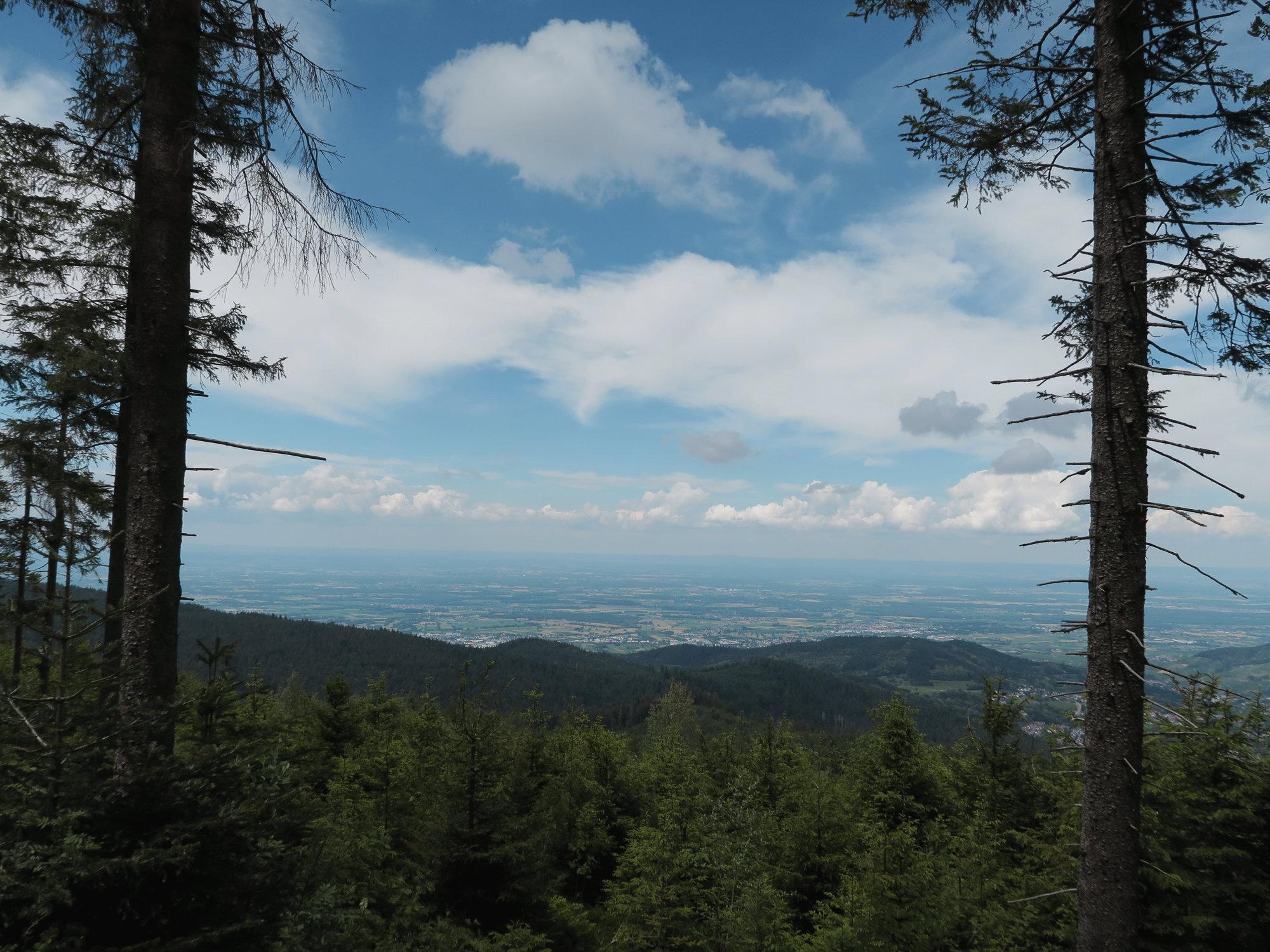 Ausblick im Schwarzwald, Trekking, Wanderung