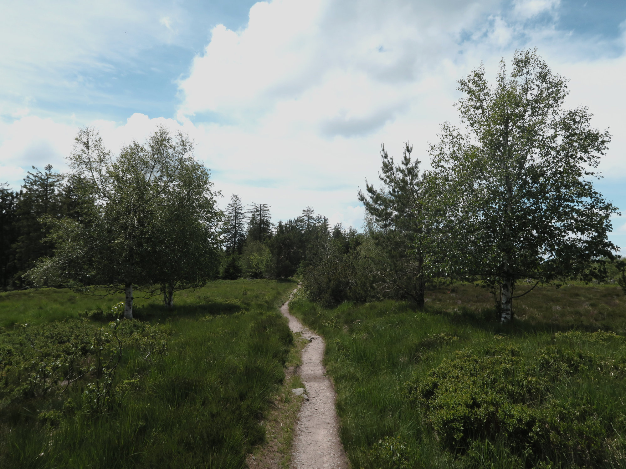 Im Hochmoor auf dem Hochkopf, Trekkingtour im Schwarzwald