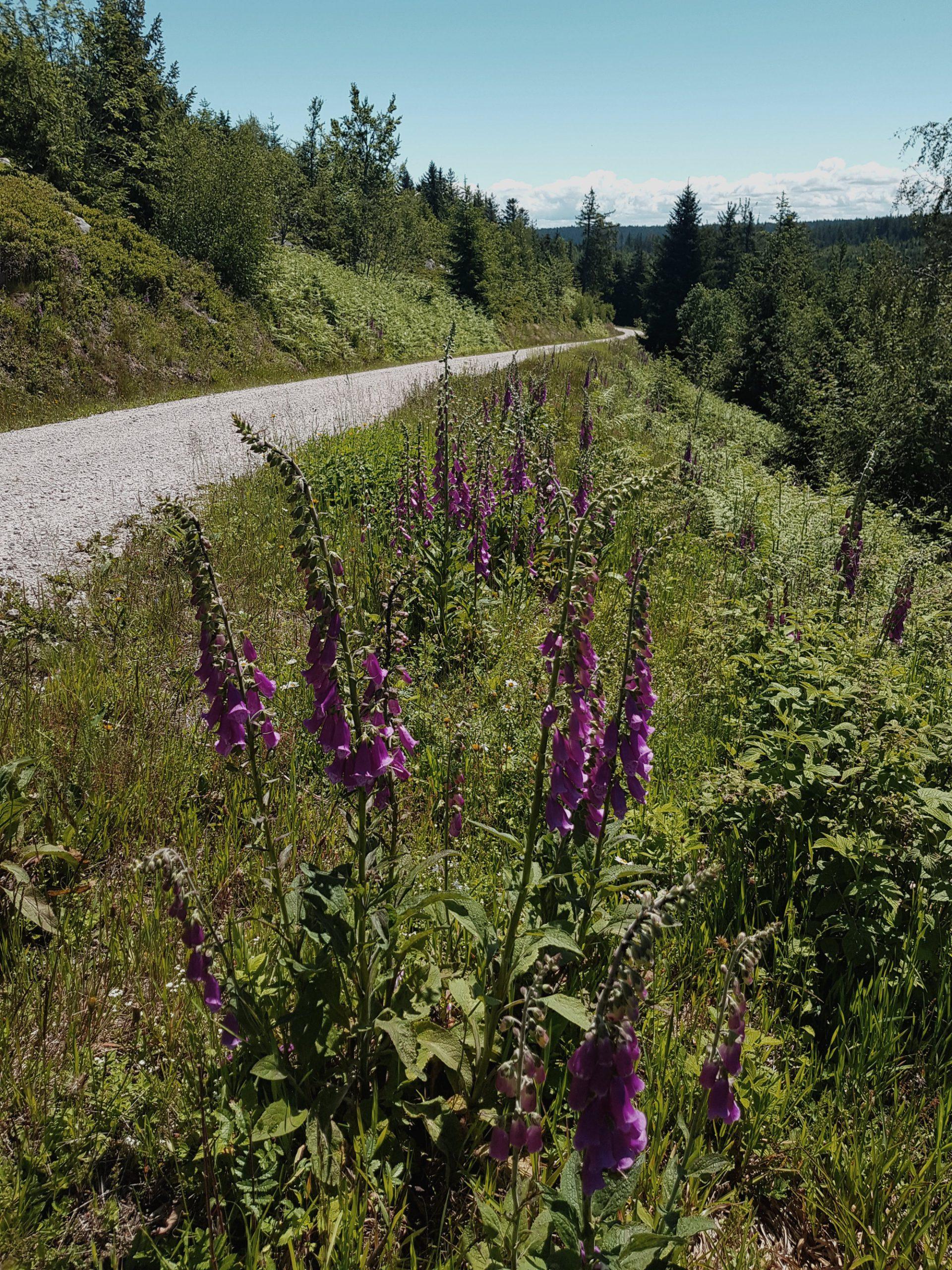 Blühende Pflanzen machen auch einen Schotterweg wunderschön